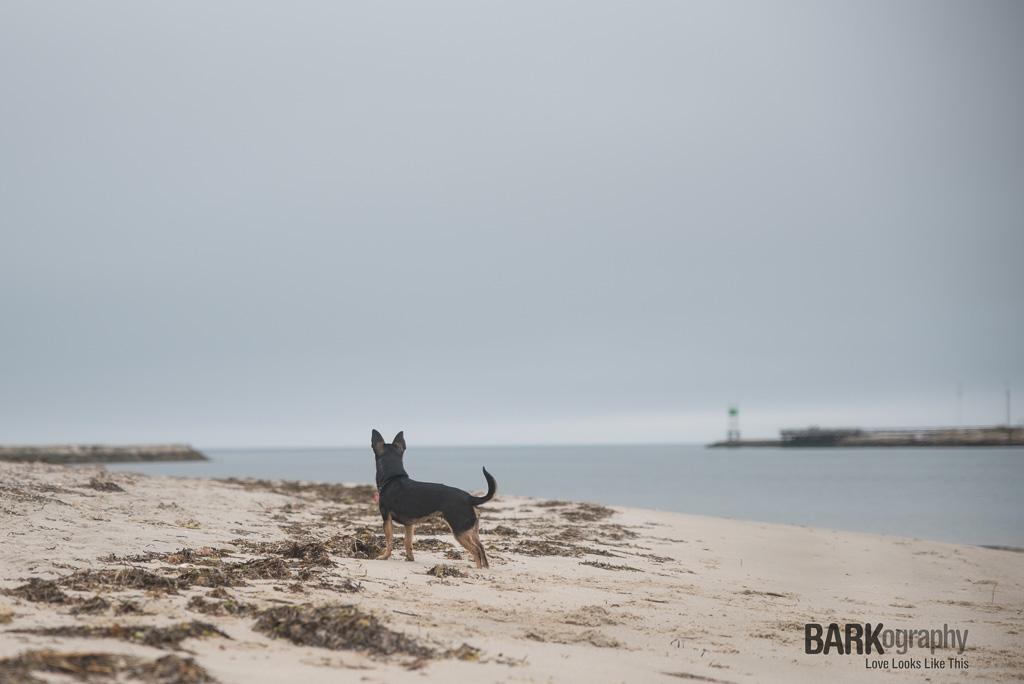Minney on the beach.