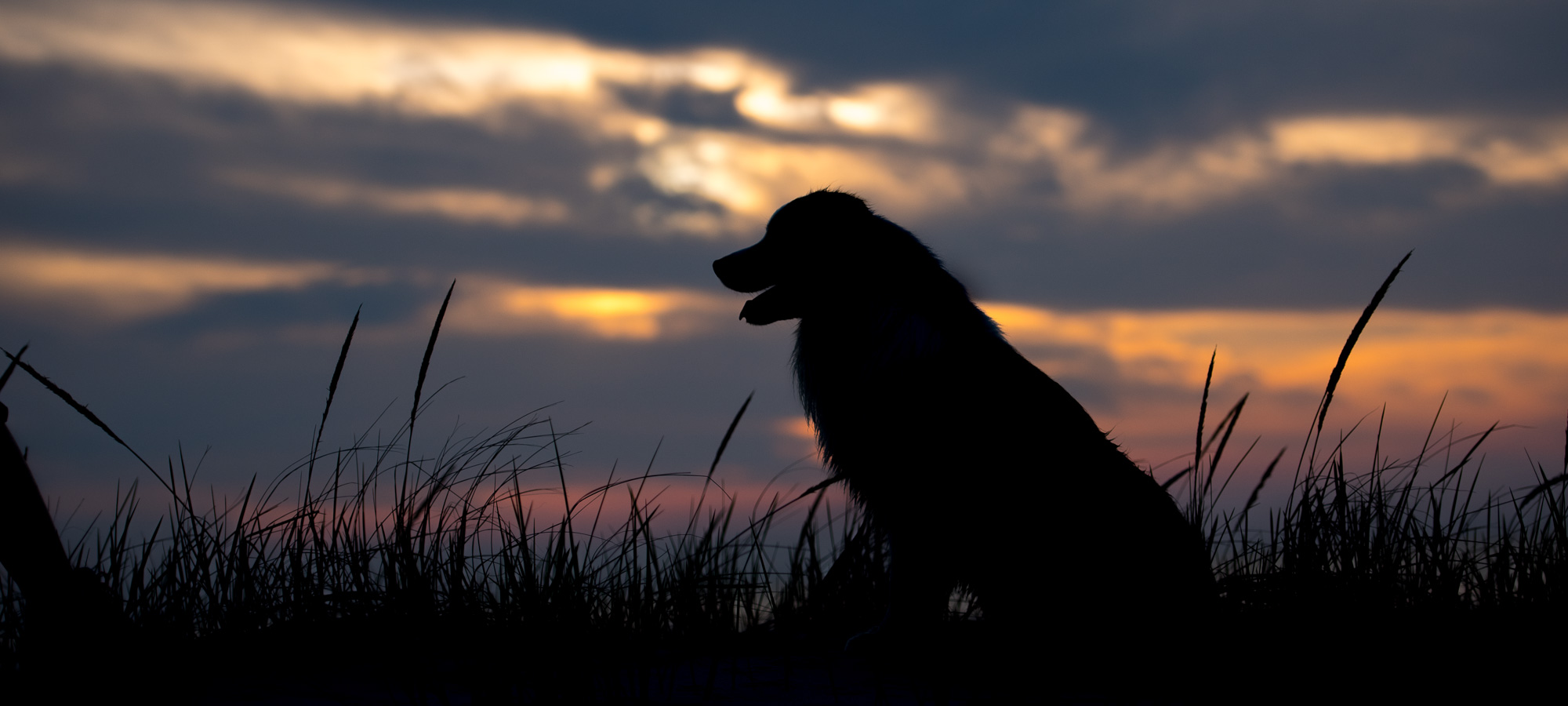 Sunsets: Dog Photography Project 52