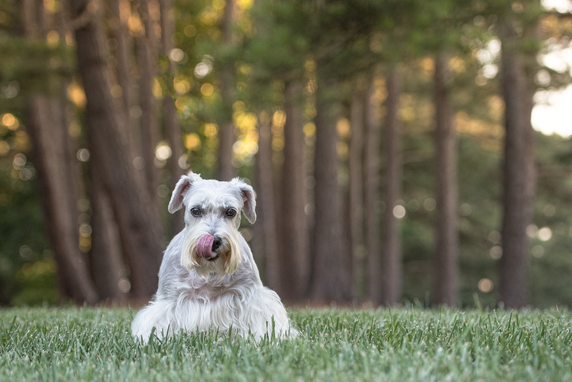 dog photography in 28210