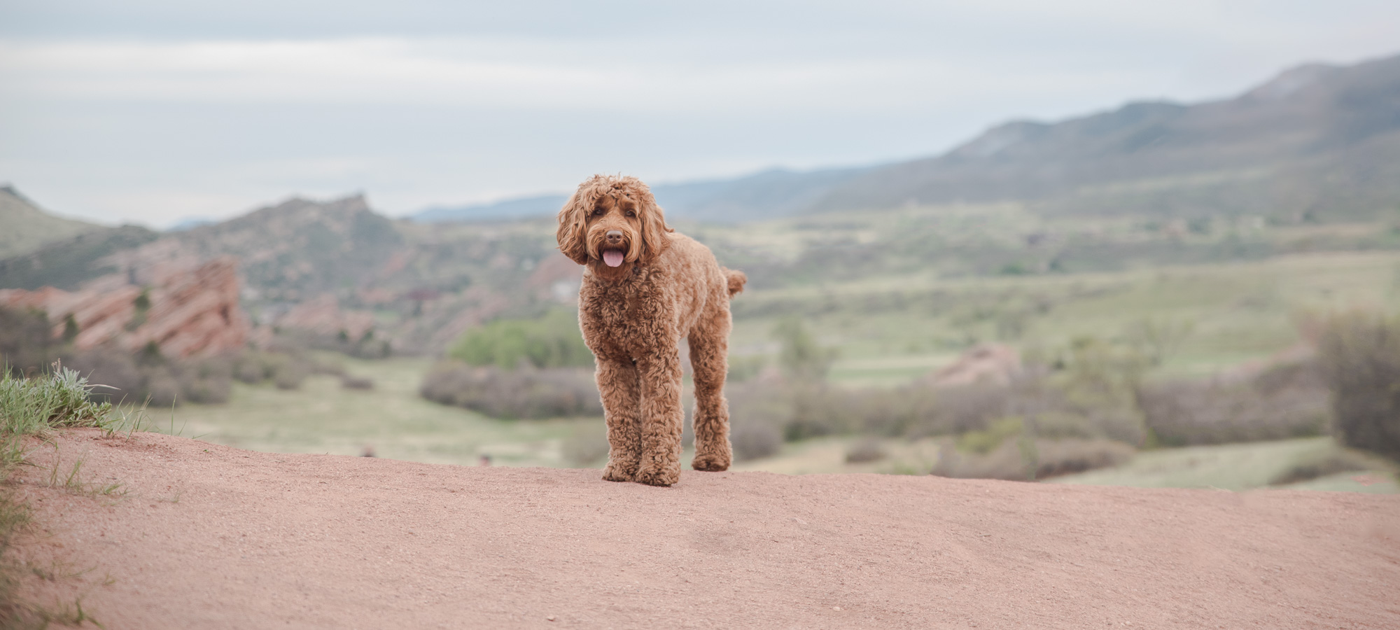 Colorado Dog Photography