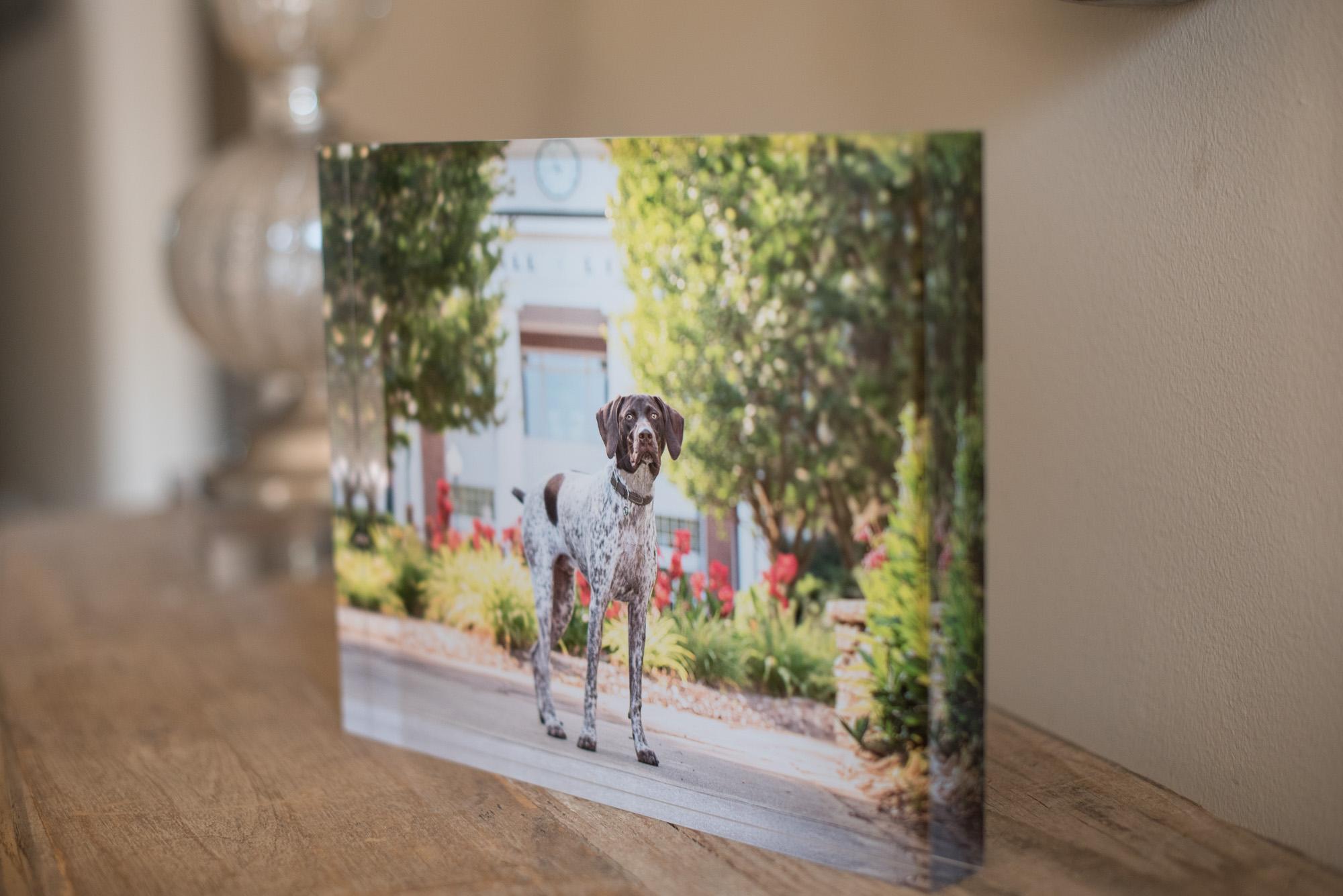dog photography art.JPG