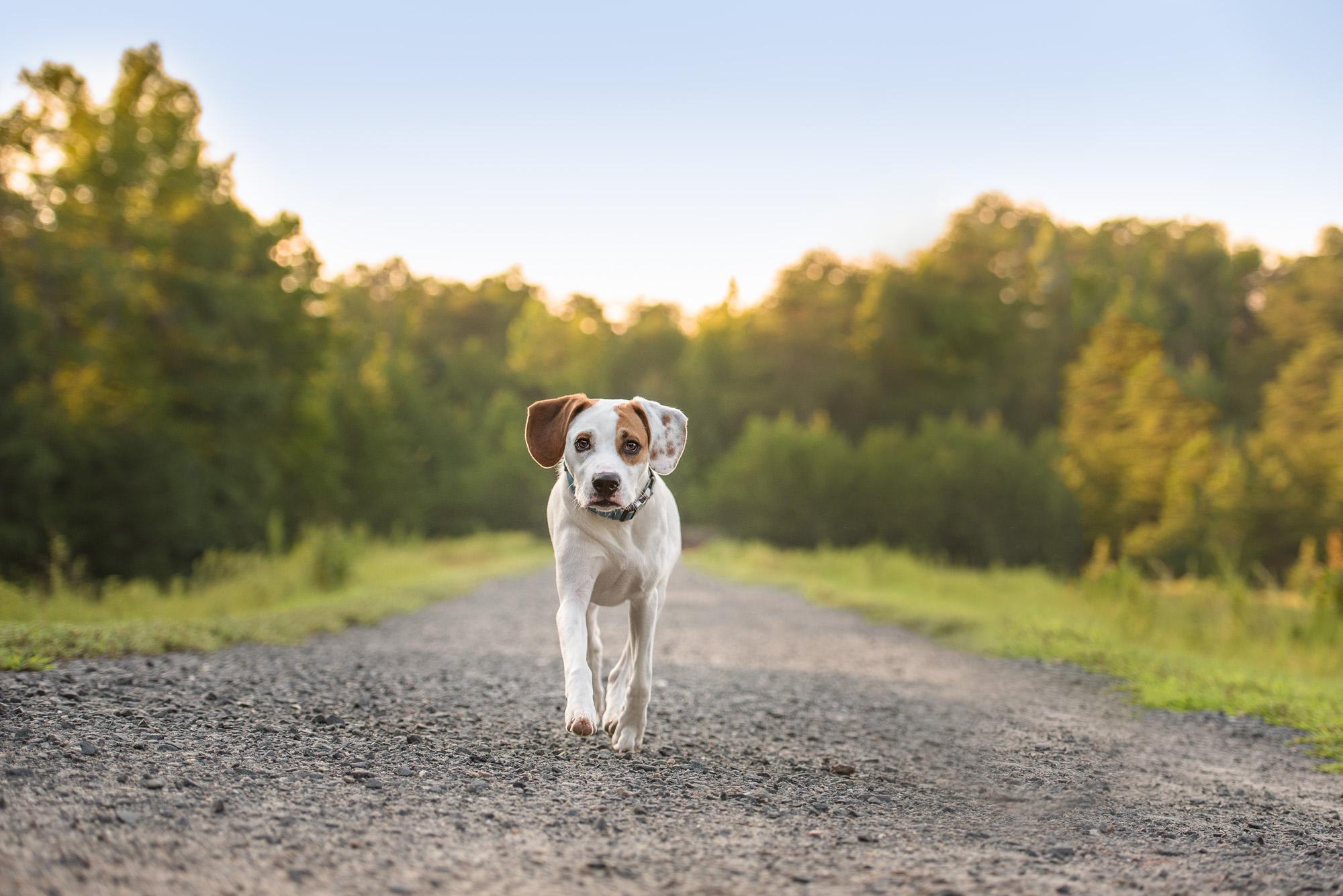 Matthews NC Dog Photography.JPG