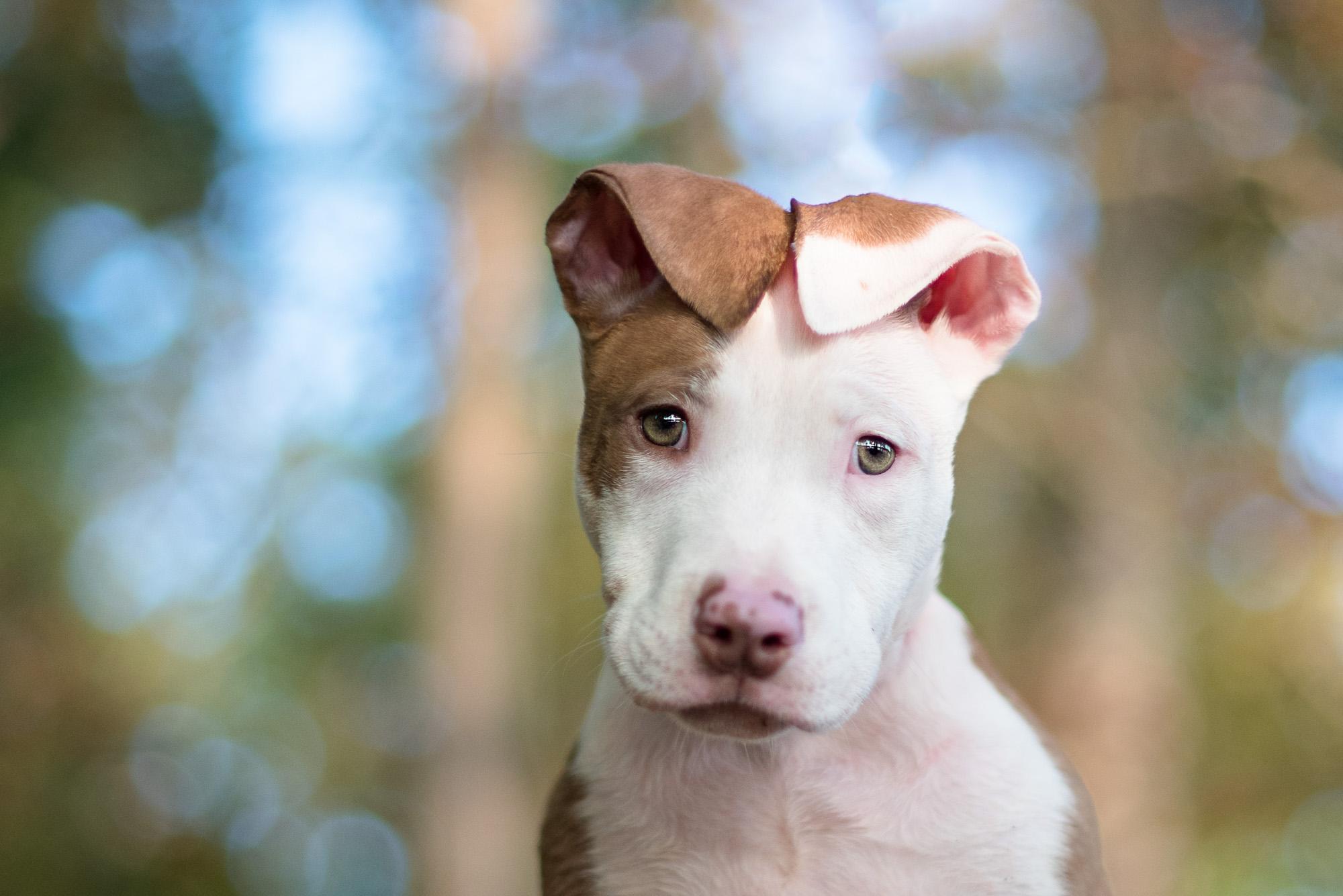 Dog Photography in Huntersville NC.JPG
