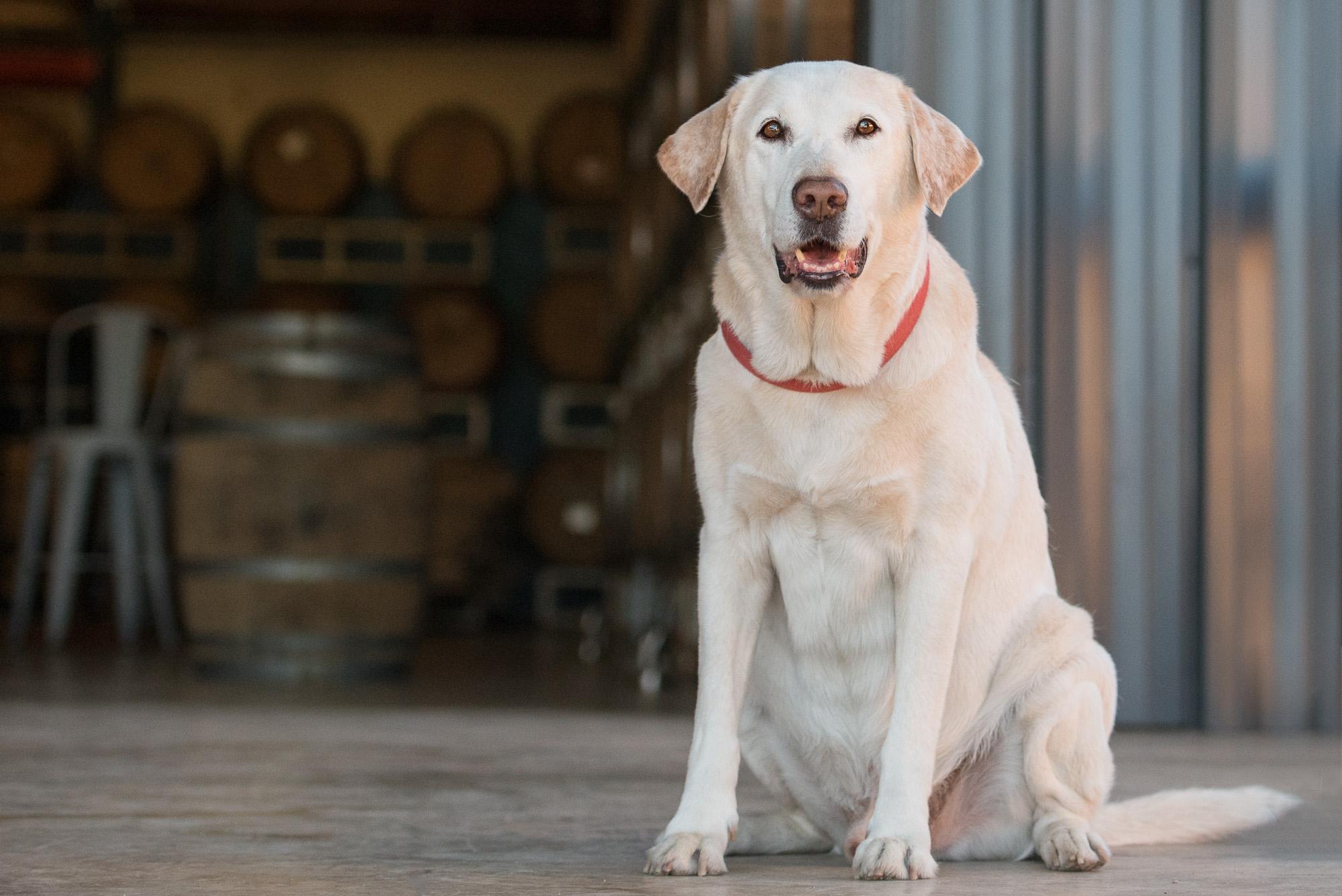 Charlotte brewery dog.JPG