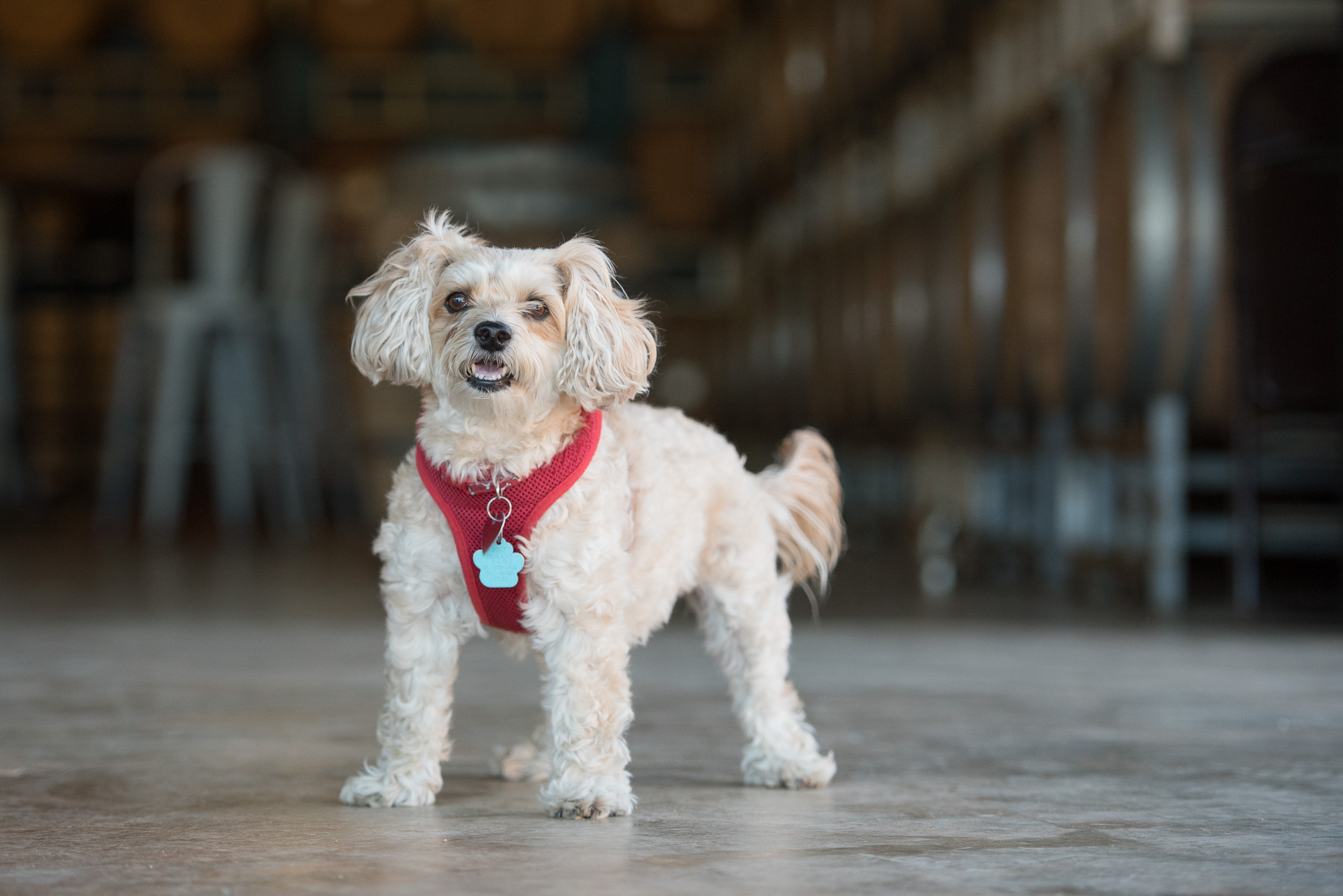 Charlotte NC Brewery Dog.JPG