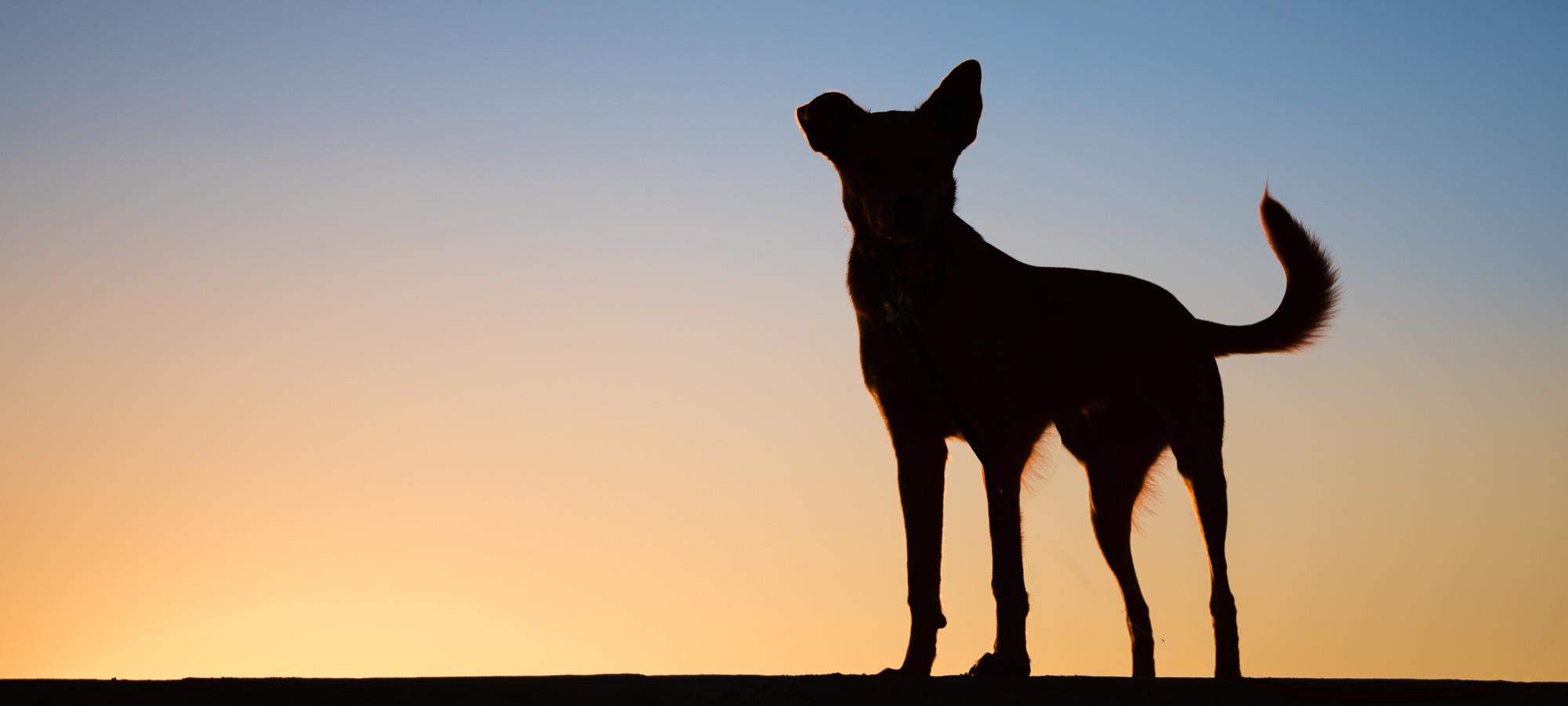 Newport Beach Dog Photographer.JPG