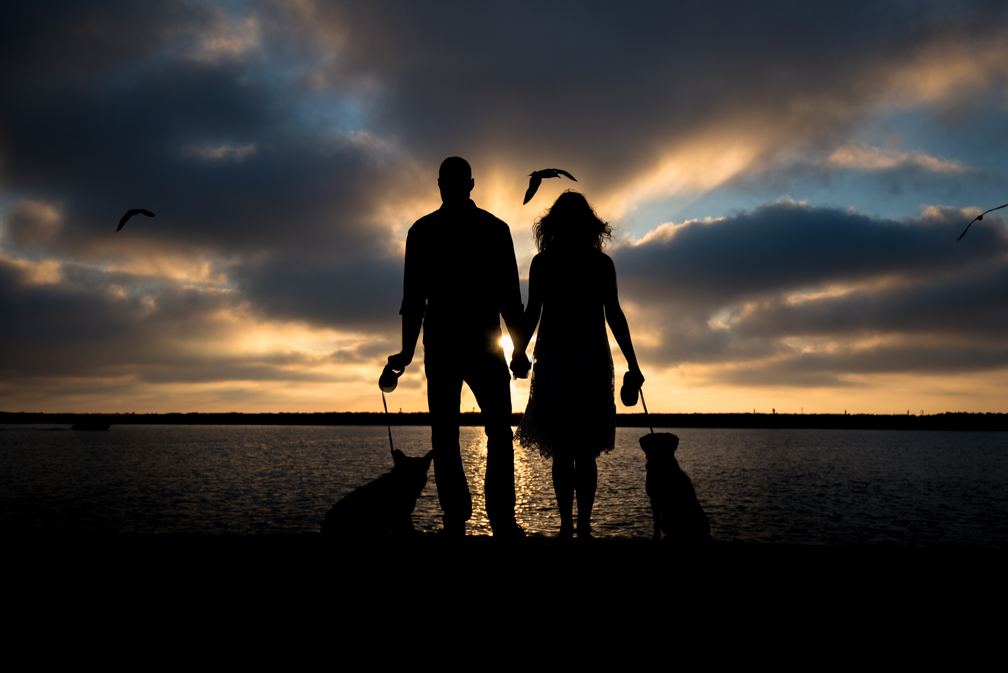 Newport Beach Dog Photography.JPG