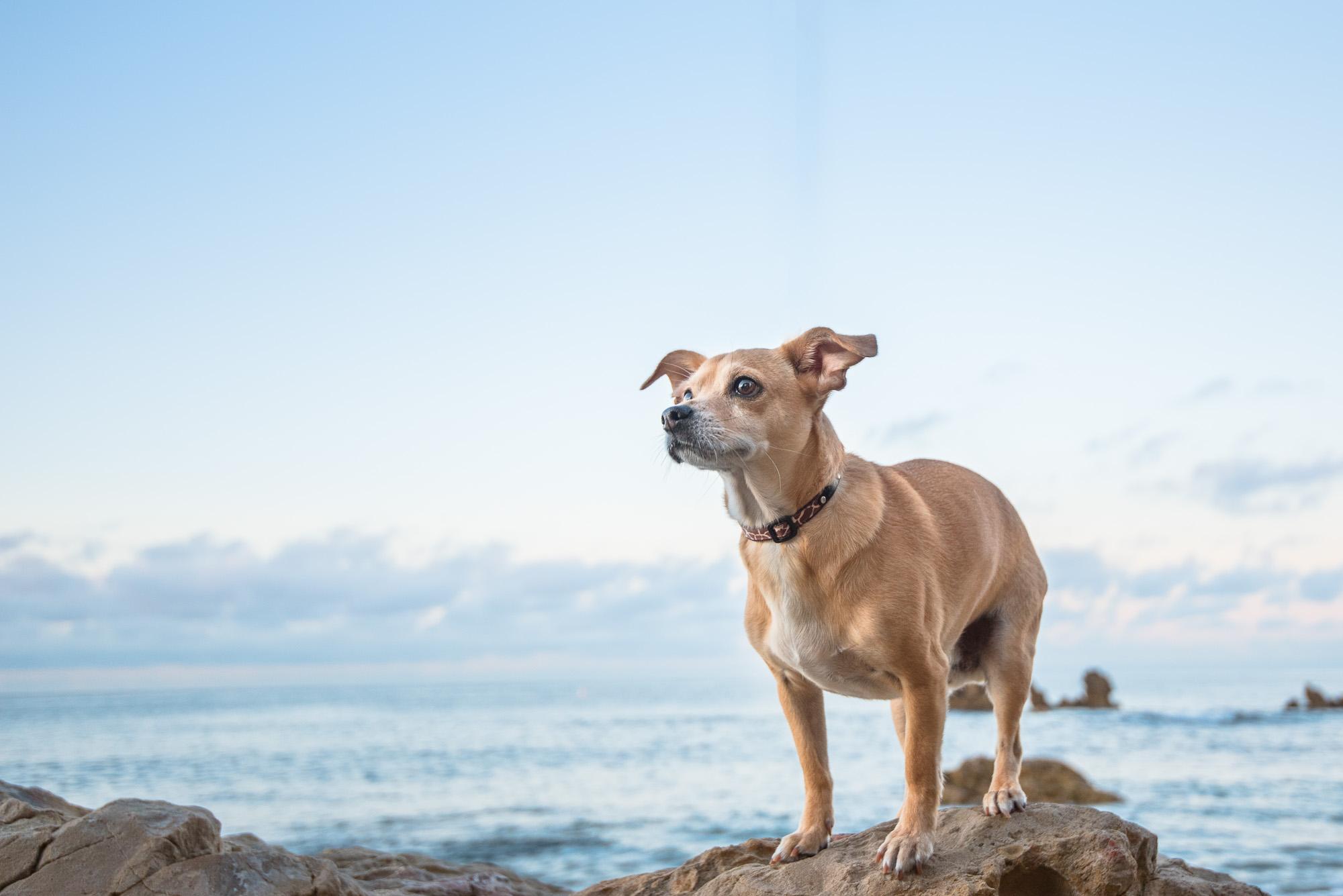 Corona del Mar Dog Photography.JPG