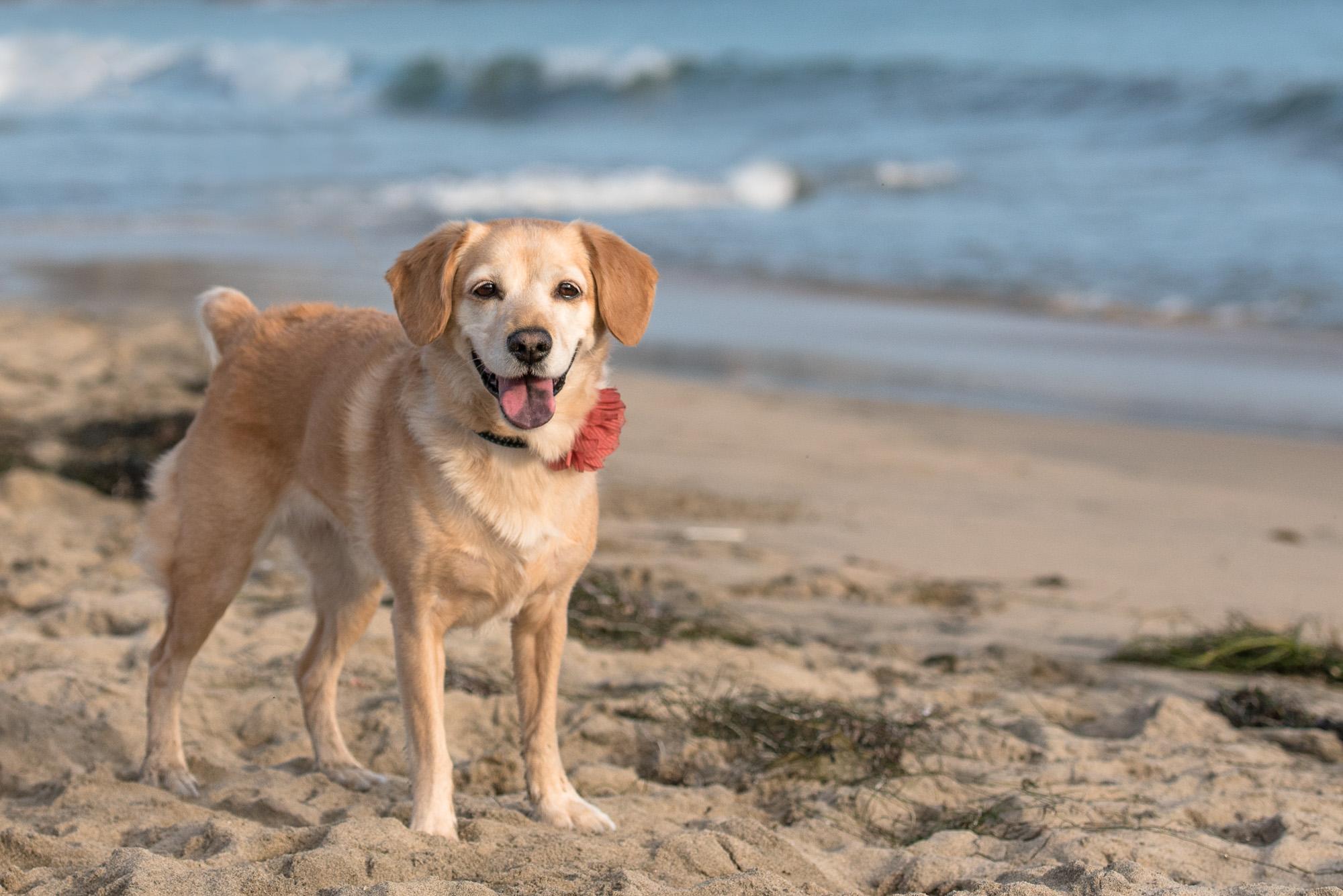 Corona del Mar Dog Photo.JPG