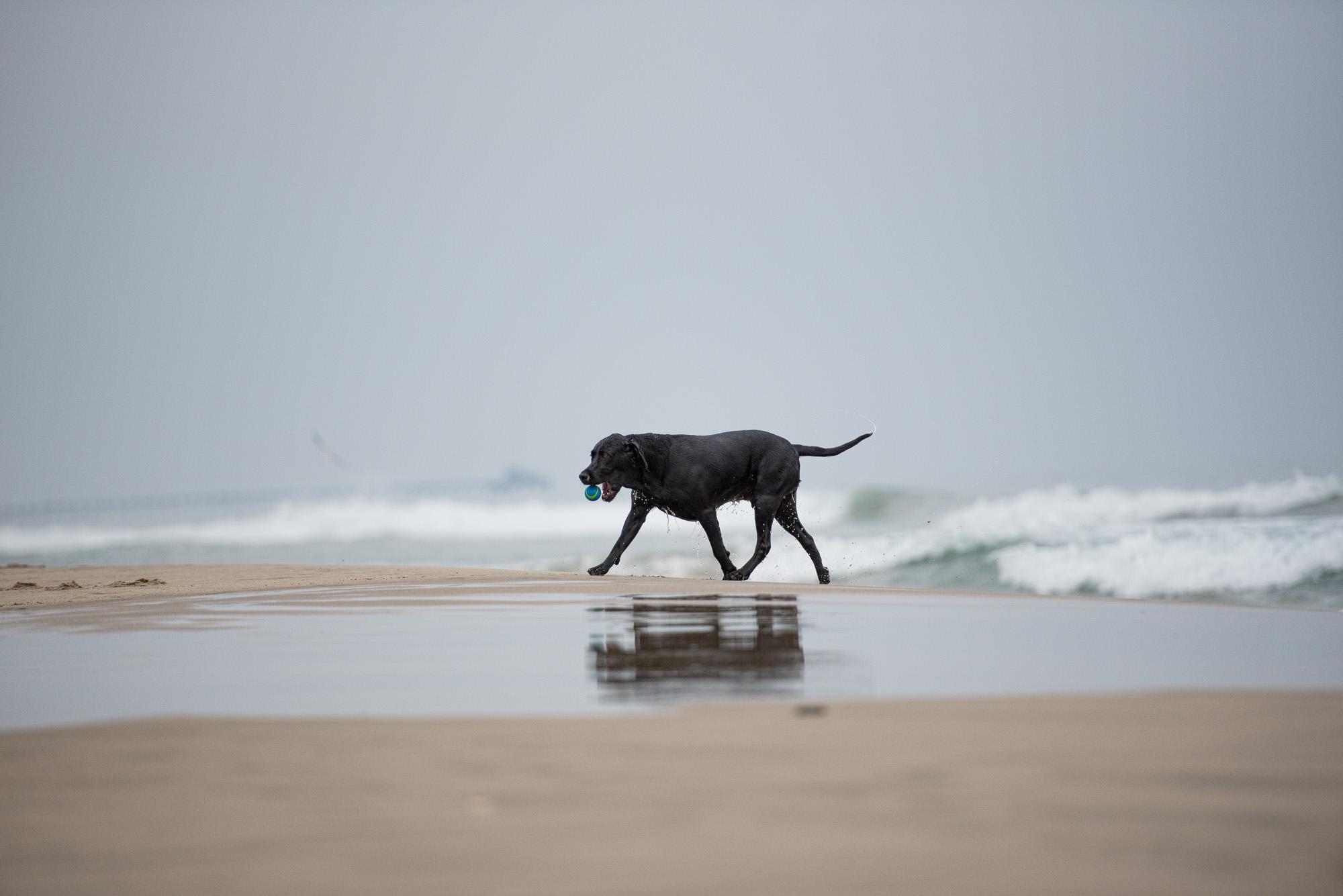 Newport Beach Dog Beach photo.JPG