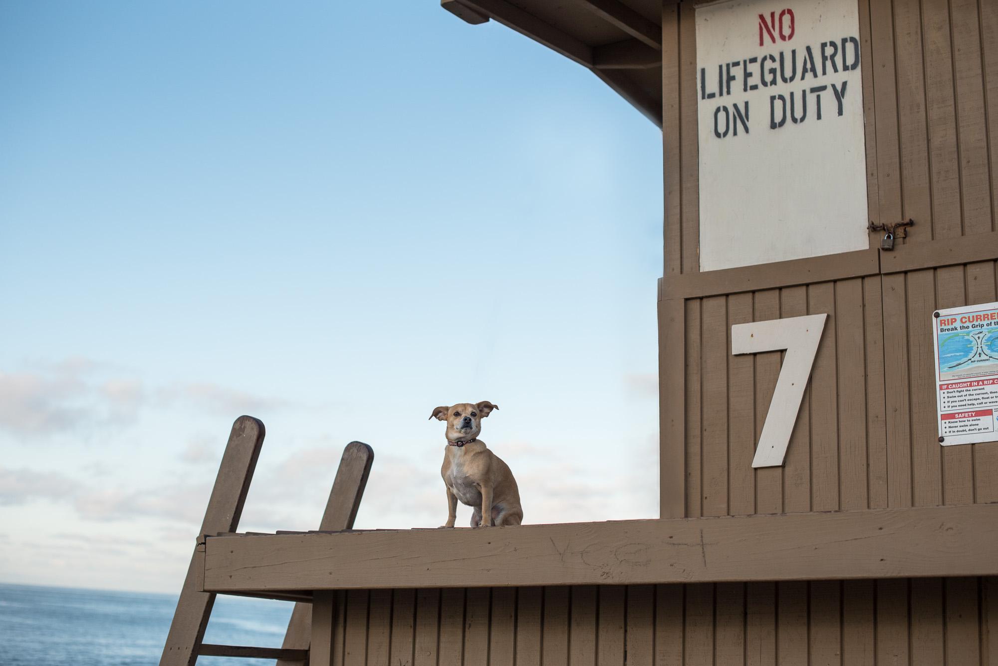 Corona del Mar Dog Photographer.JPG