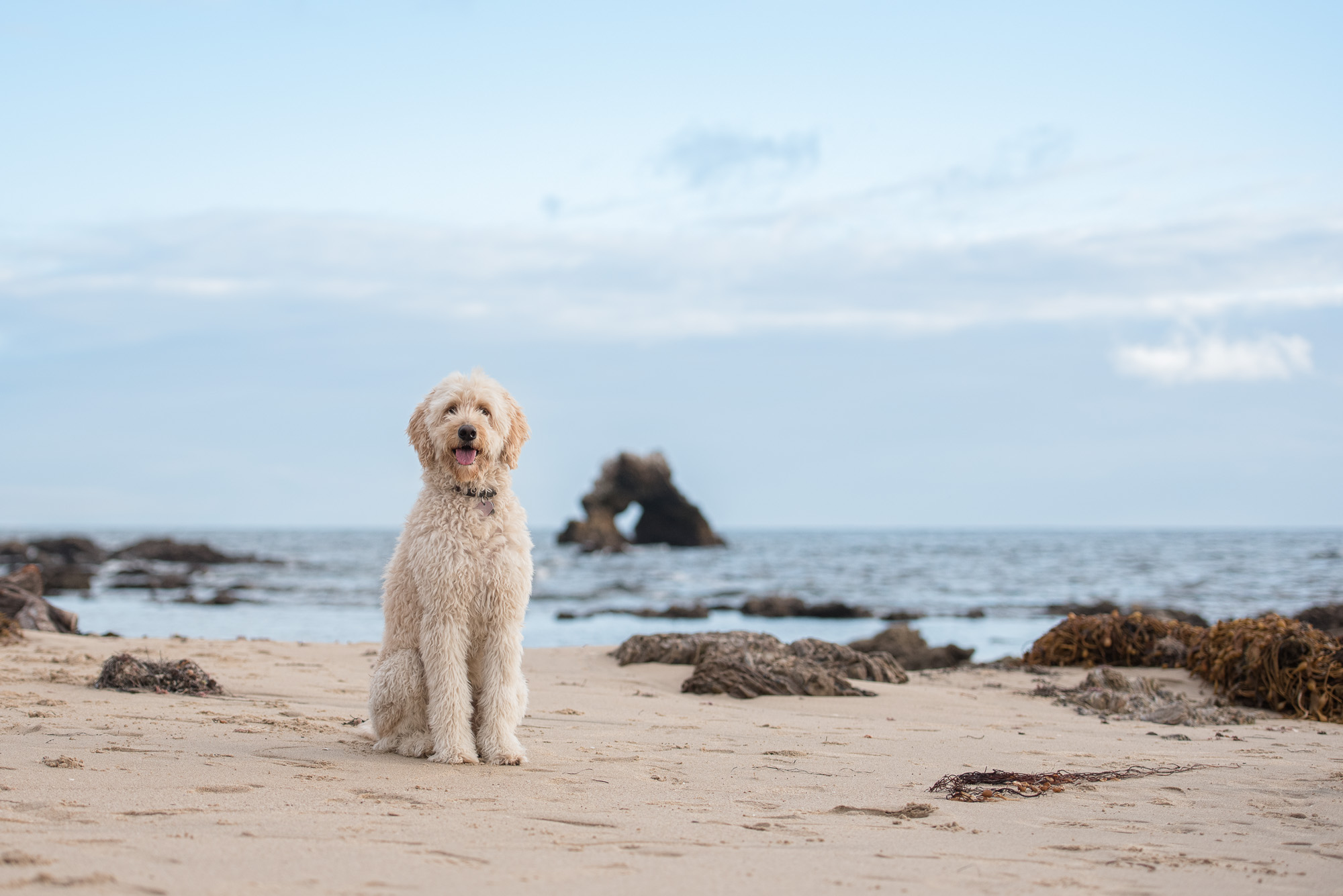 SoCal Dog Photography.JPG
