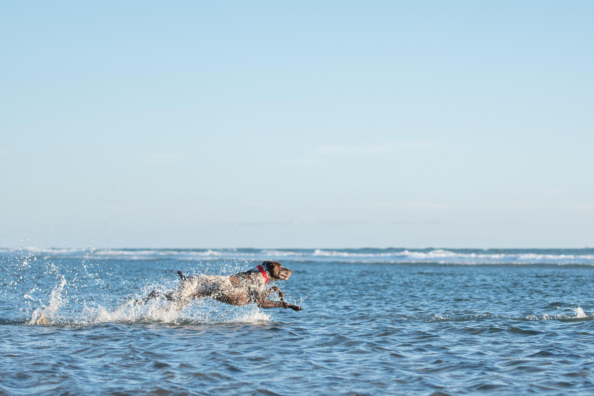 Huntington Beach Dog Beach Photographer.JPG