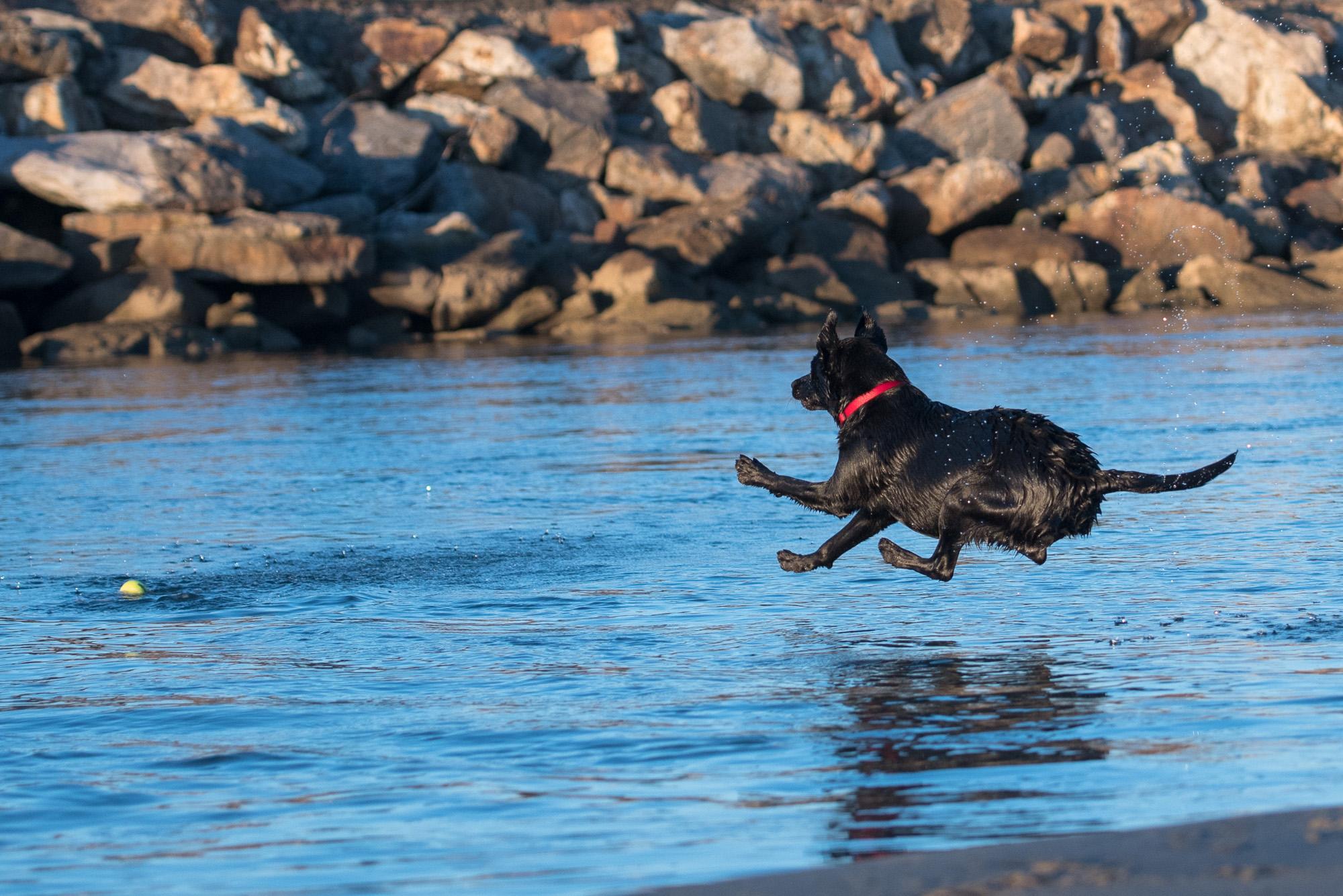 Ocean Beach Dog Photographer.JPG