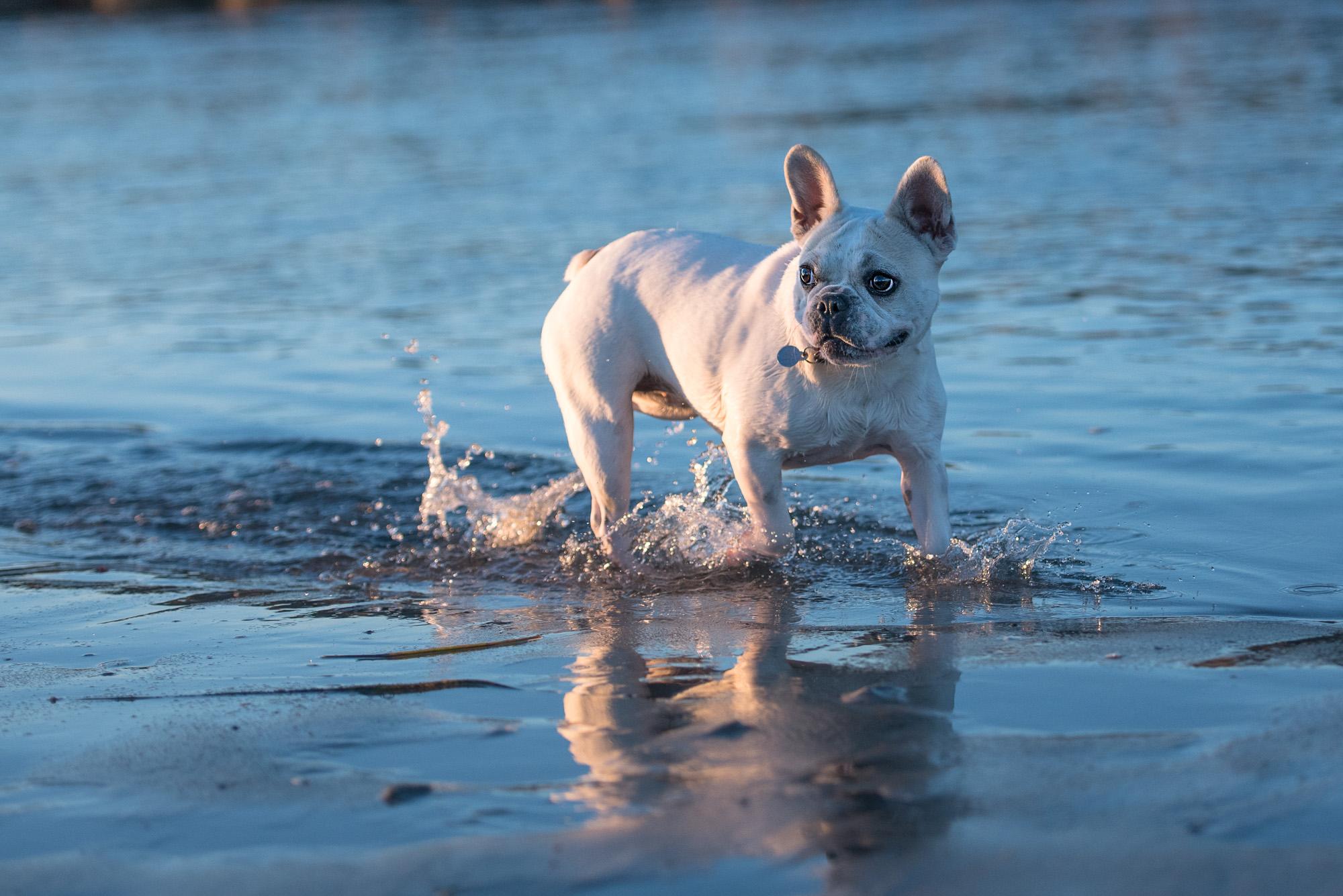 Ocean Beach Dog Photography.JPG