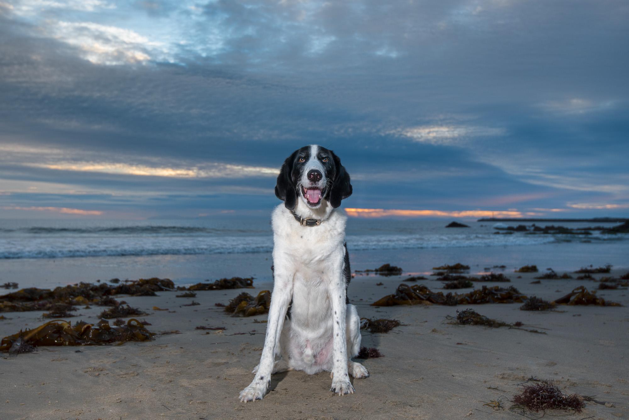 Corona del Mar California Dog Photography.JPG