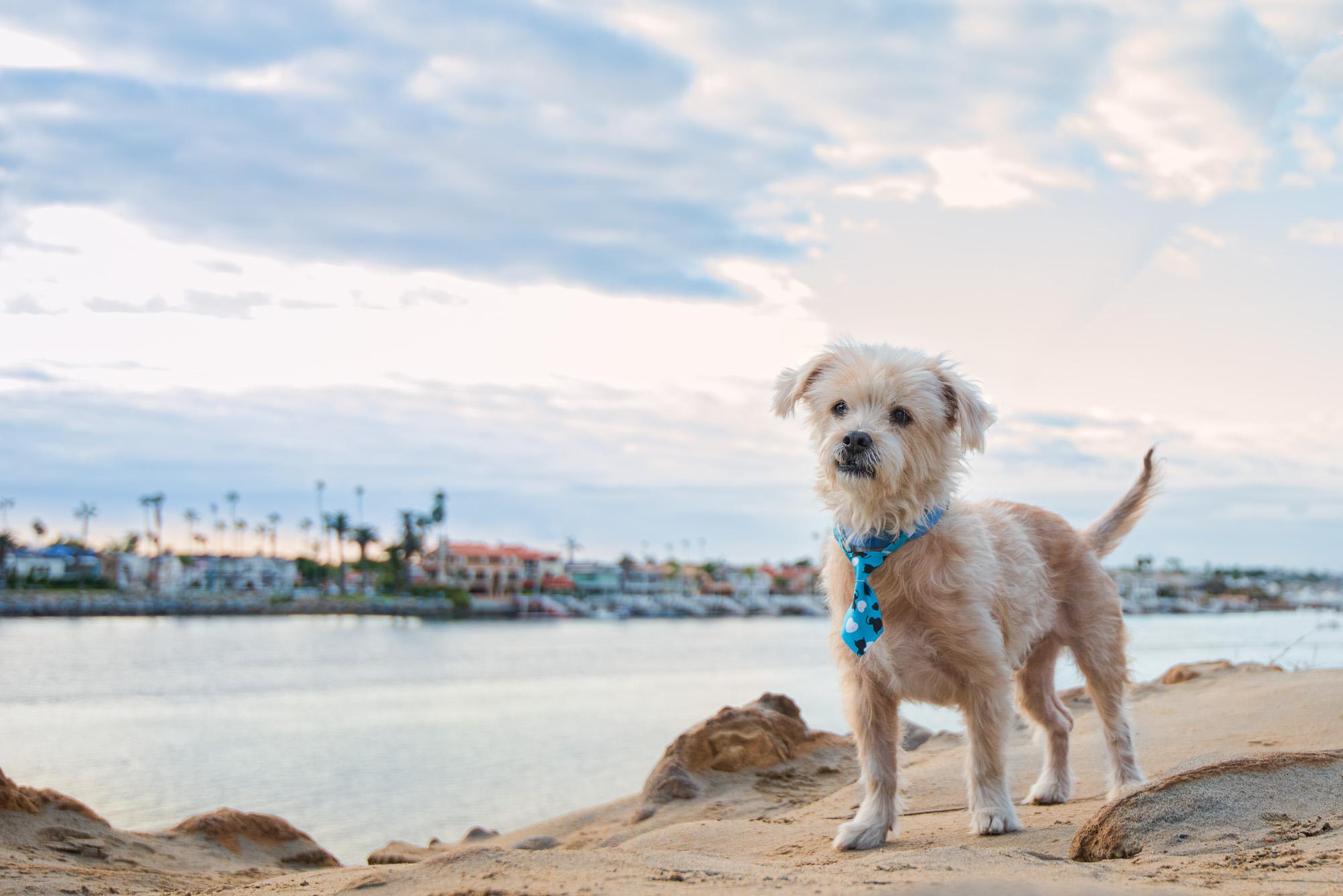 Dog Available for Adoption Newport Beach CA.JPG