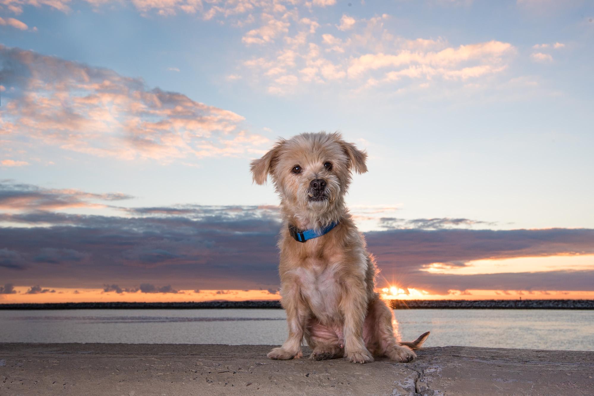 Newport Beach Dog Available for Adoption.JPG