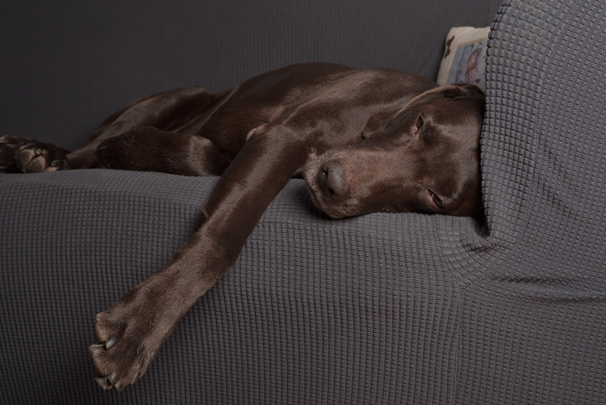 dog relaxing photo.JPG
