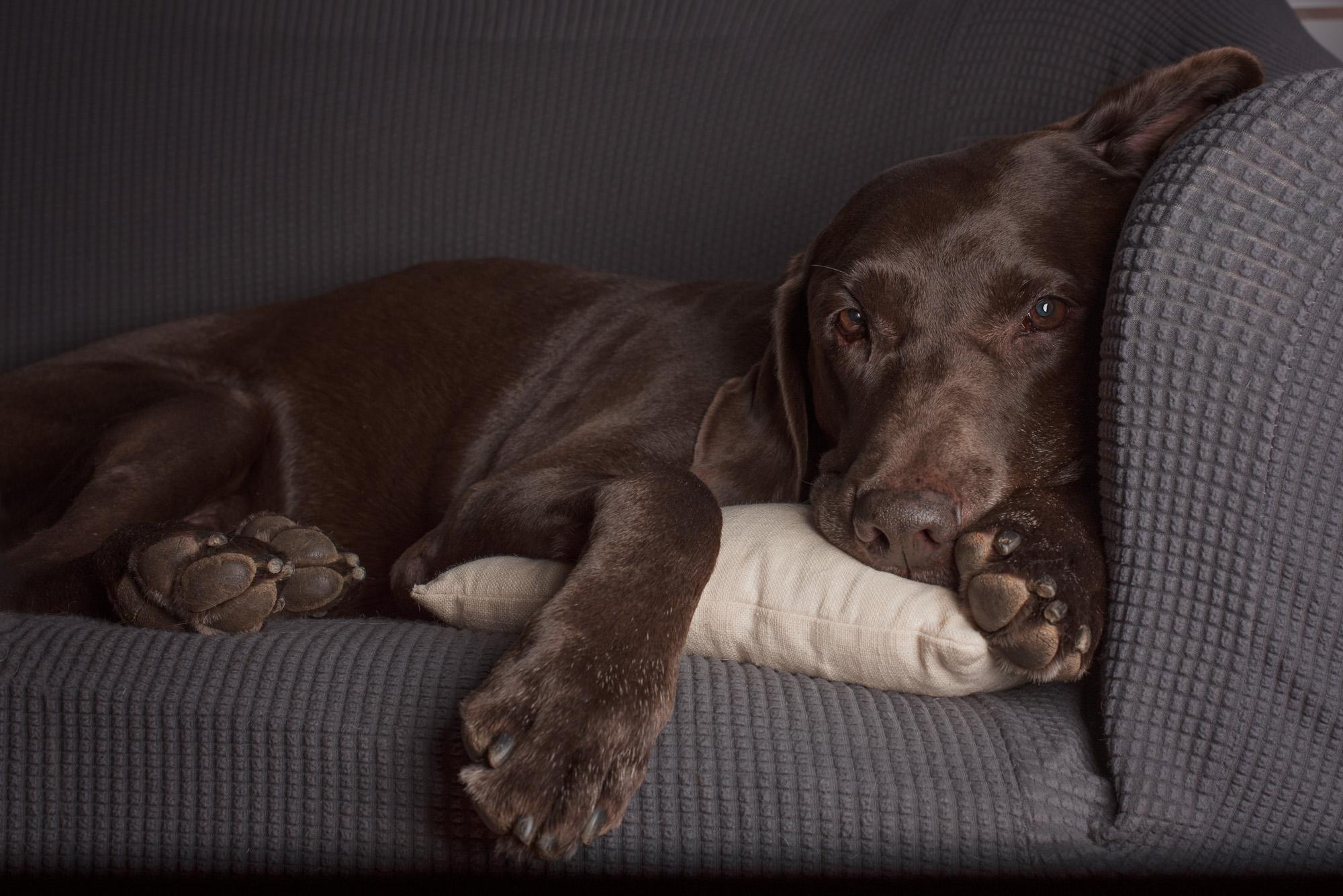 Moose relaxing.JPG