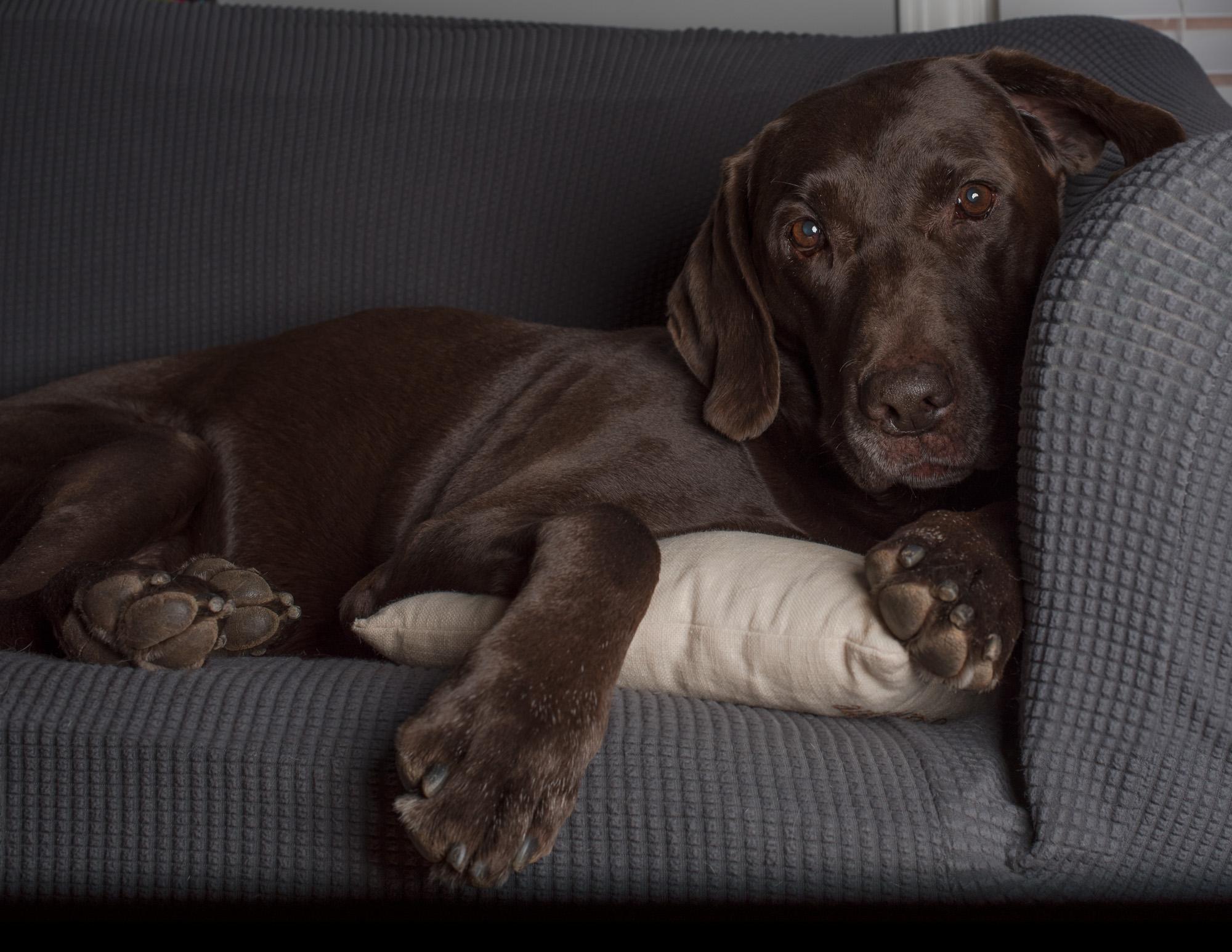 Photographer's dog relaxing.JPG