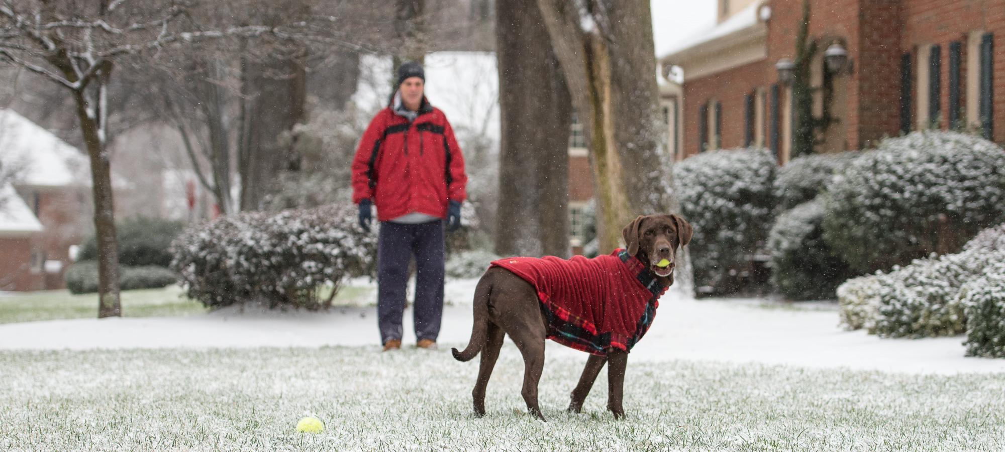 Ugly sweater or cute dog coat.JPG
