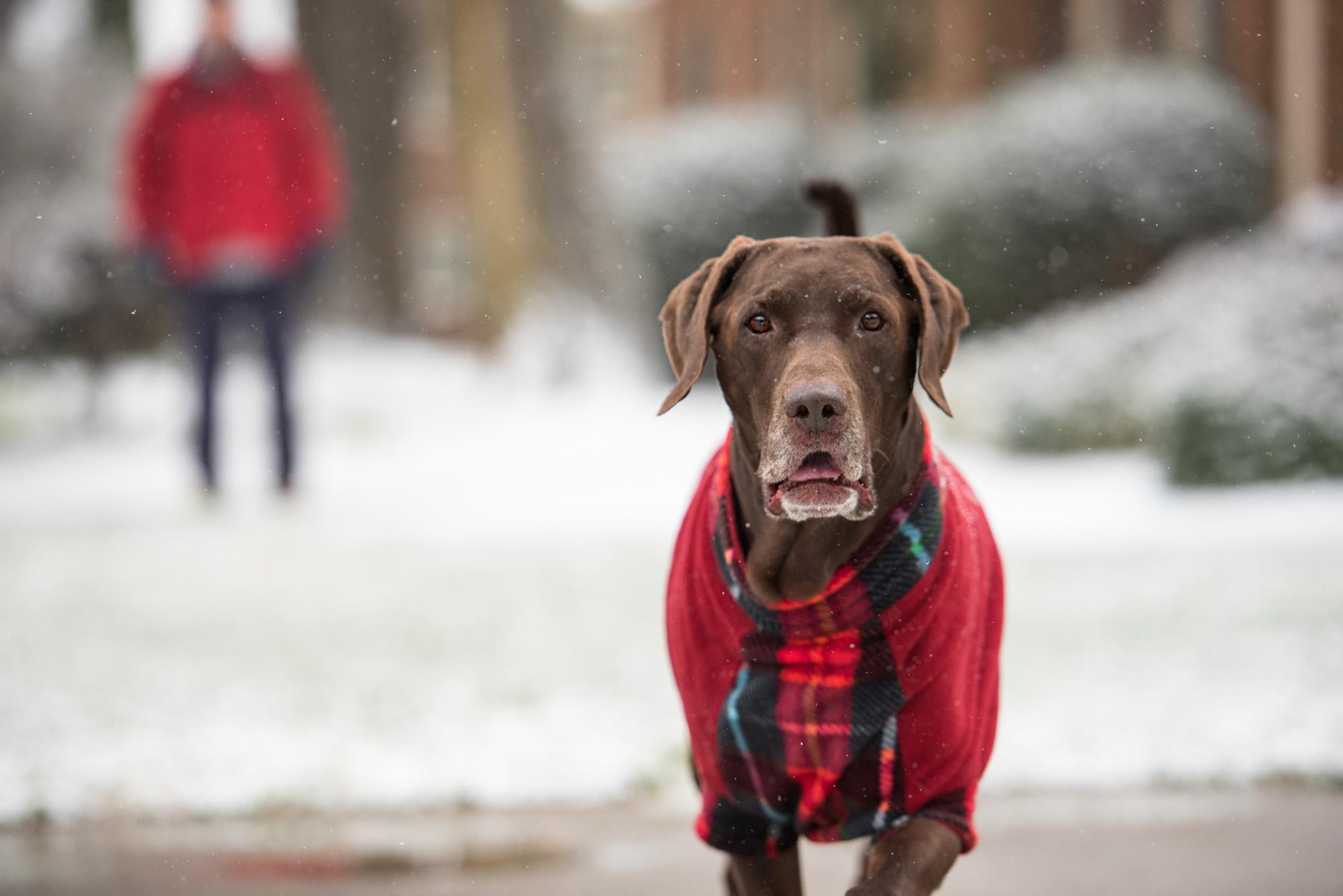 Dog in a coat.JPG