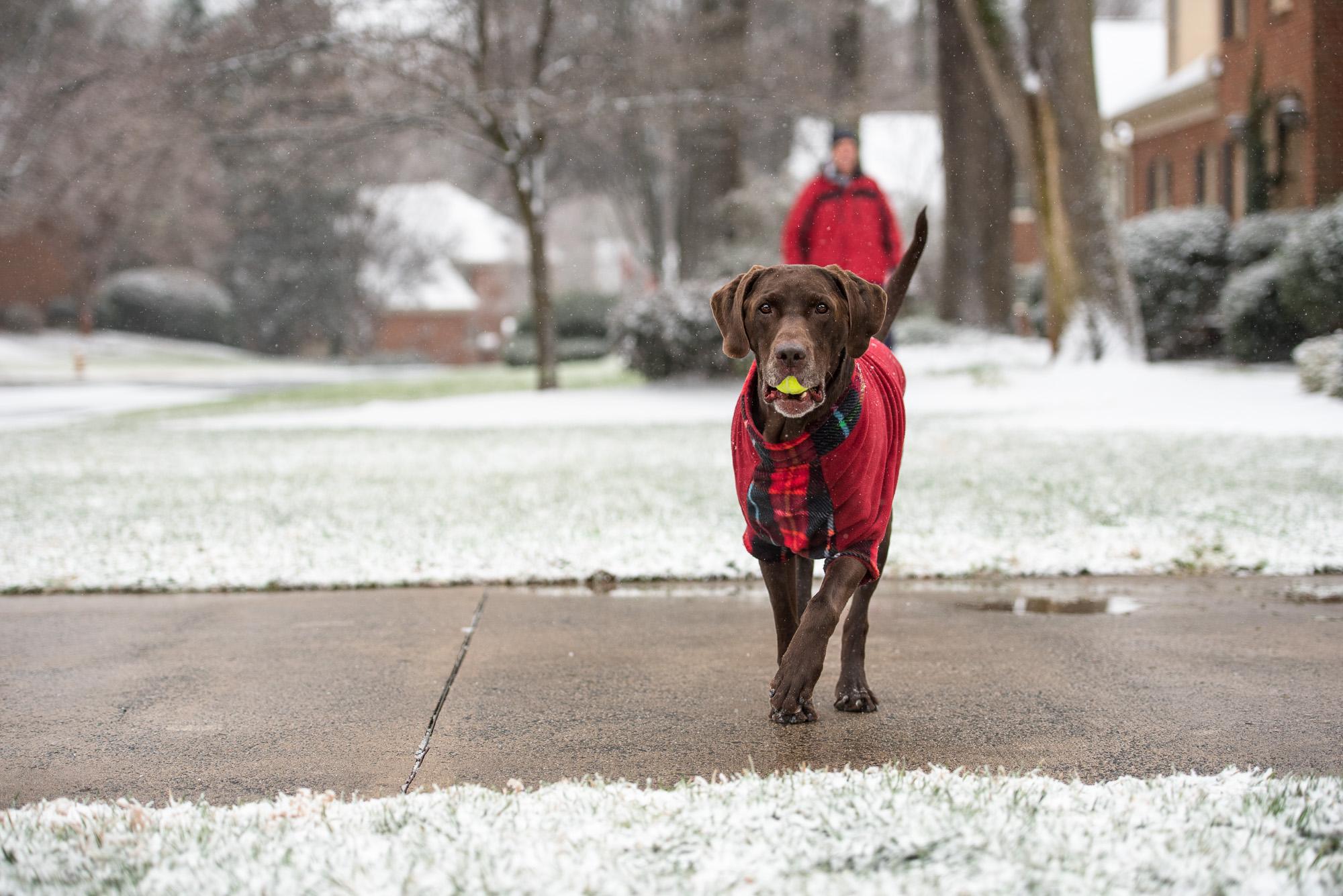 Snow Dog Photography.JPG