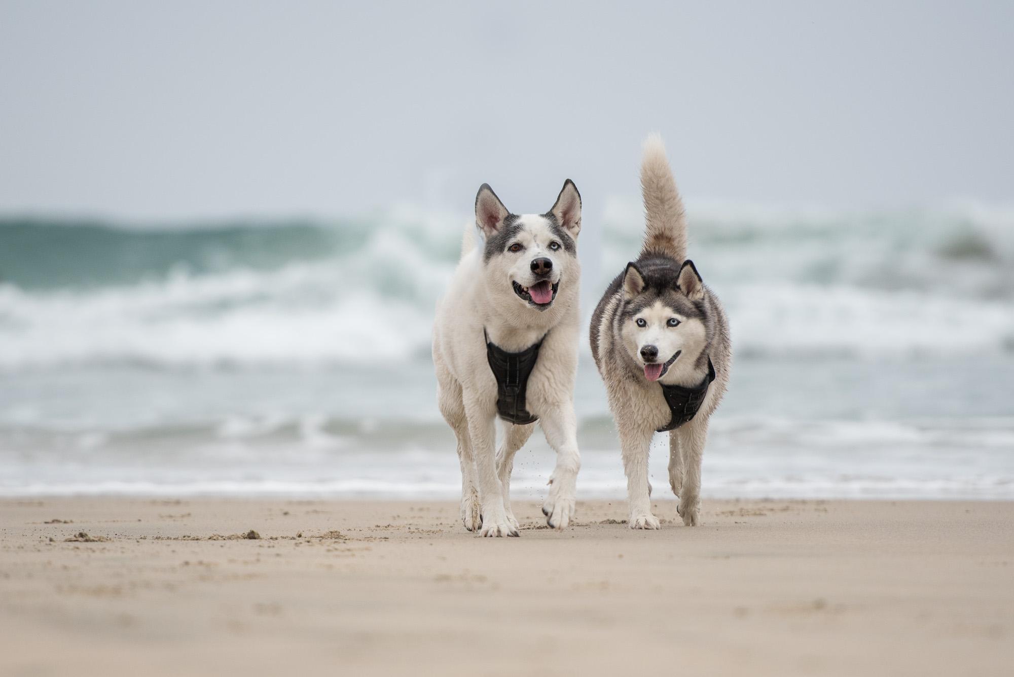 dog photographer in Newport Beach.JPG