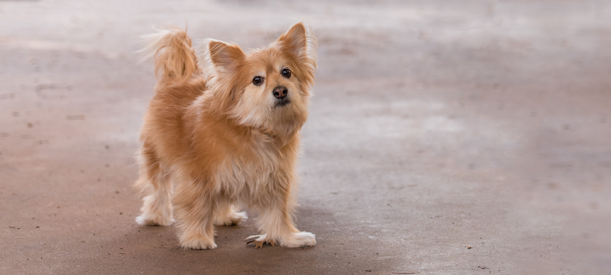 """This cutie is a pet sitting client of mine named Rocky. I was able to snap a couple of photos of him before he ran off. I went to a Charlotte Photography Club meetup this past Saturday and the instructor said to me, """"photographing dogs is hard!"""" Yep, it is."""
