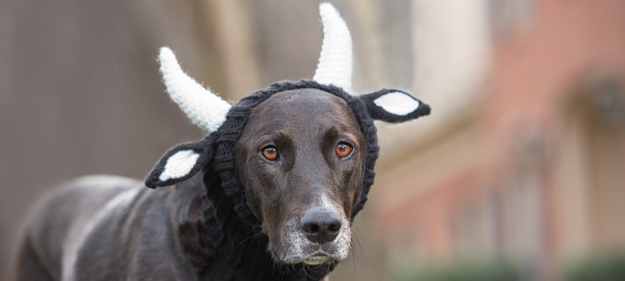 Did you just enter a fantasy? Is this a bull or a dog?