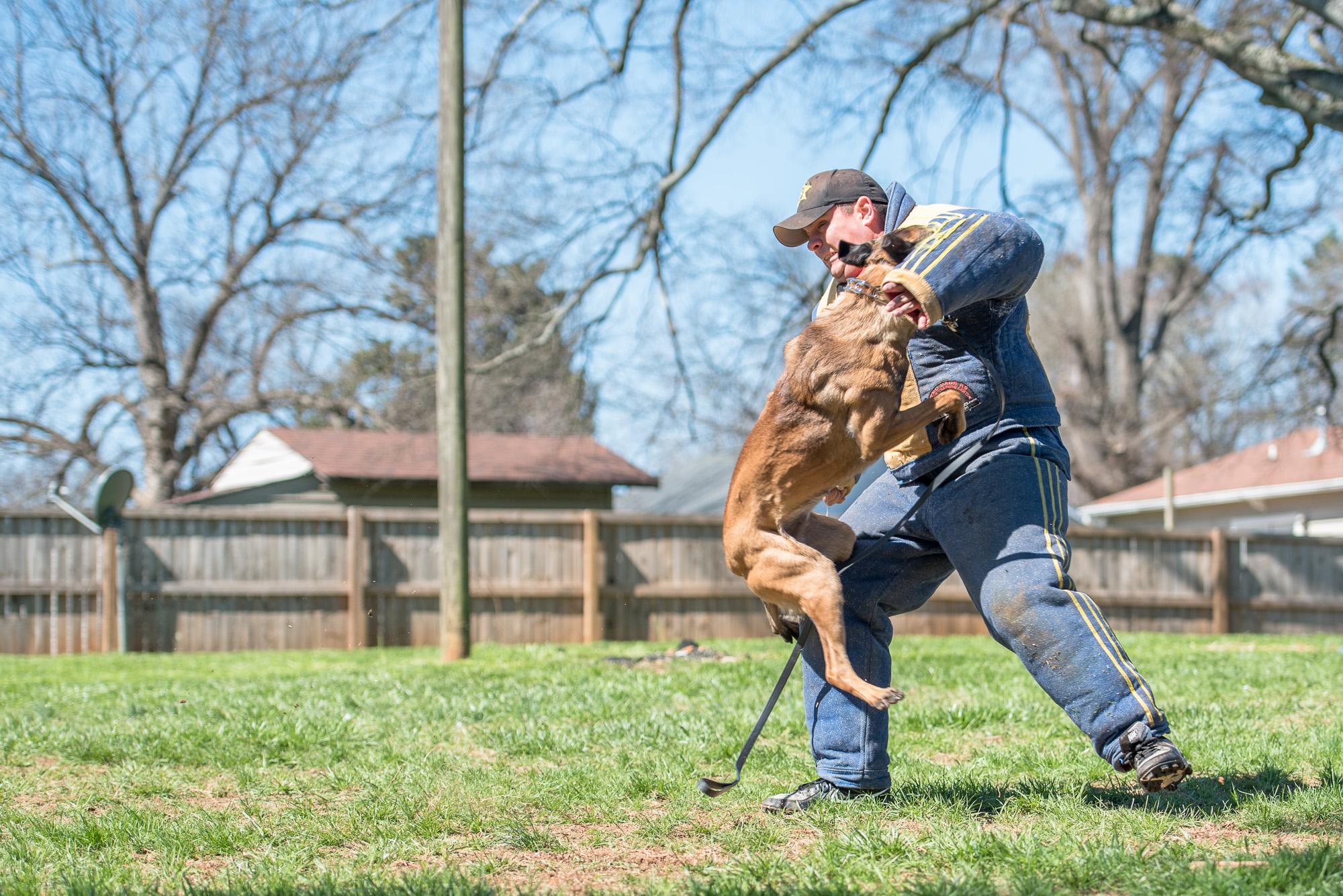 protection dog training.JPG