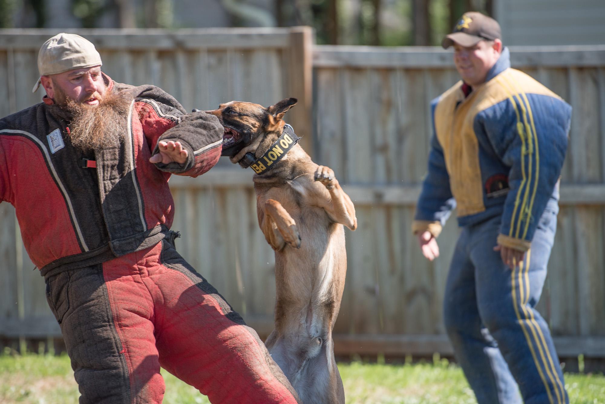 working dog trainers.JPG