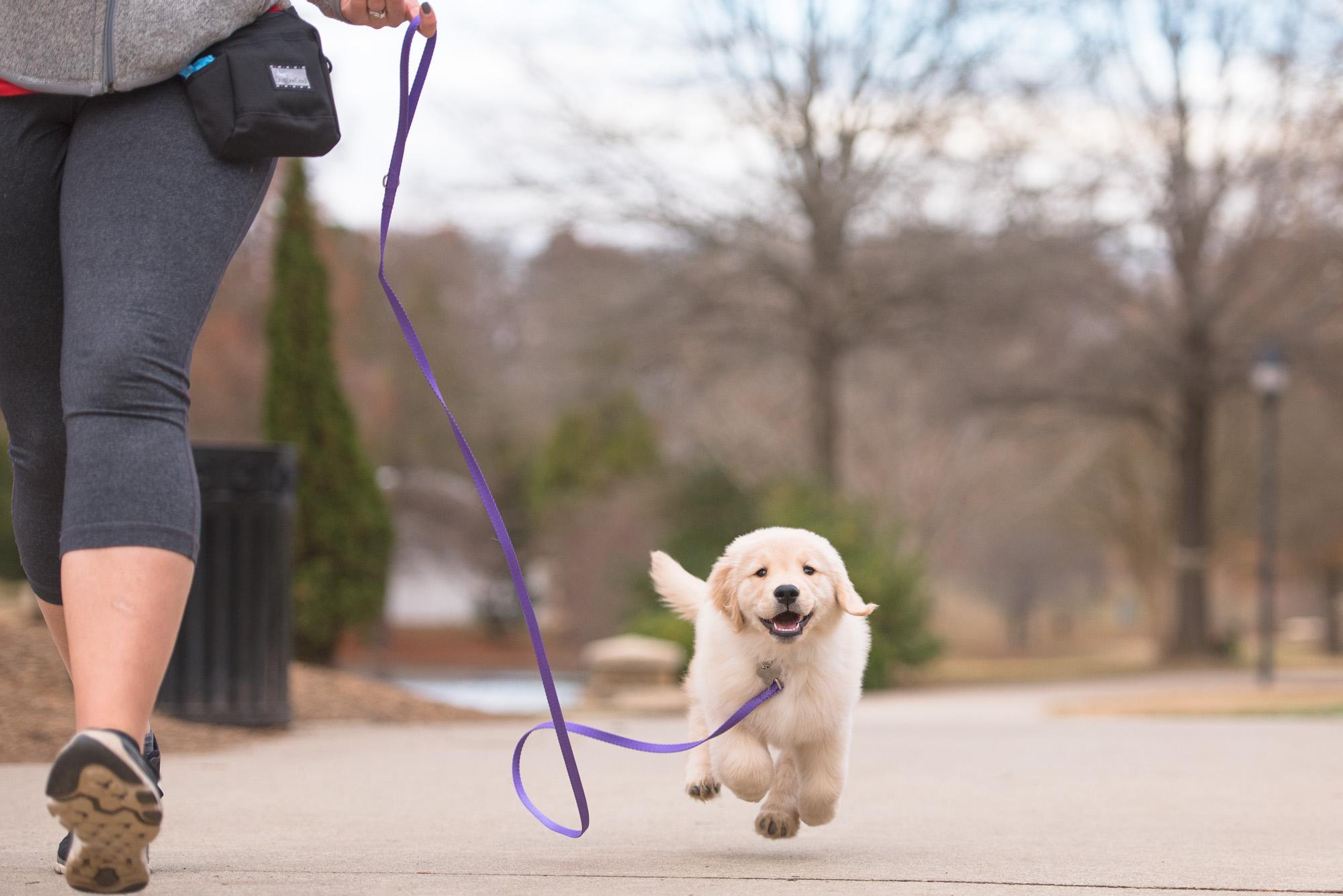 commercial dog photographer.JPG
