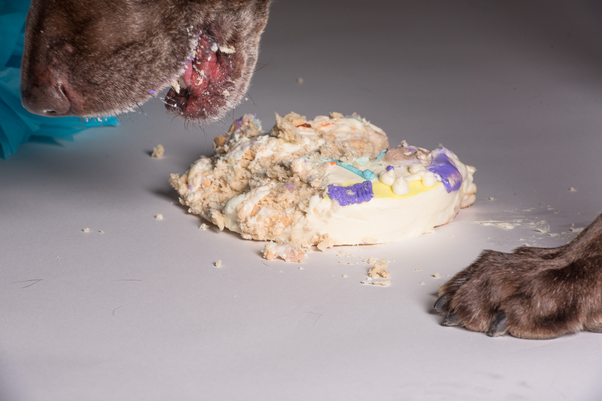 The very 1st picture I took of Moose with his birthday cake. This was not what I was expecting to get. (unedited photo)