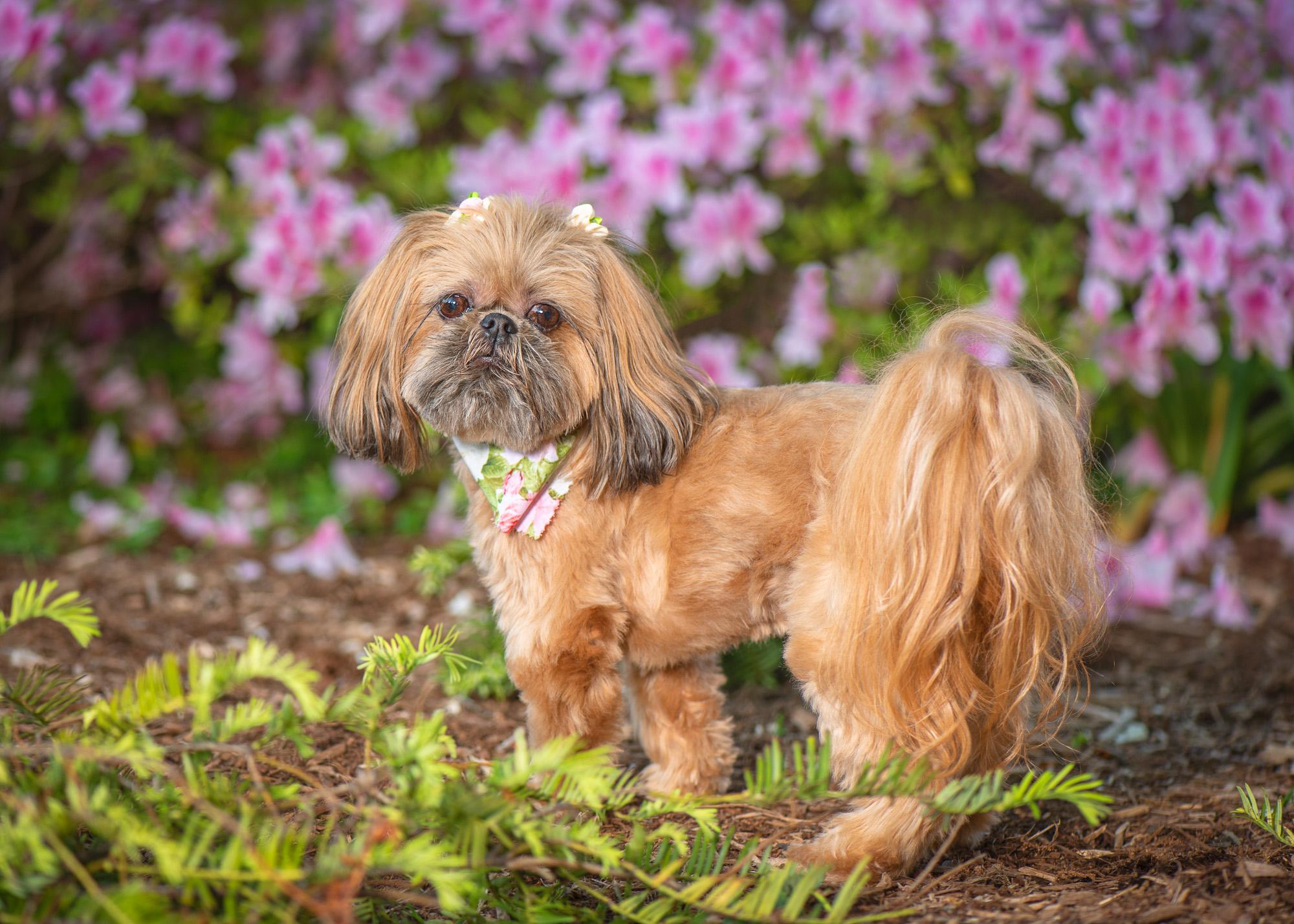 colorful dog photo of Lulu.JPG