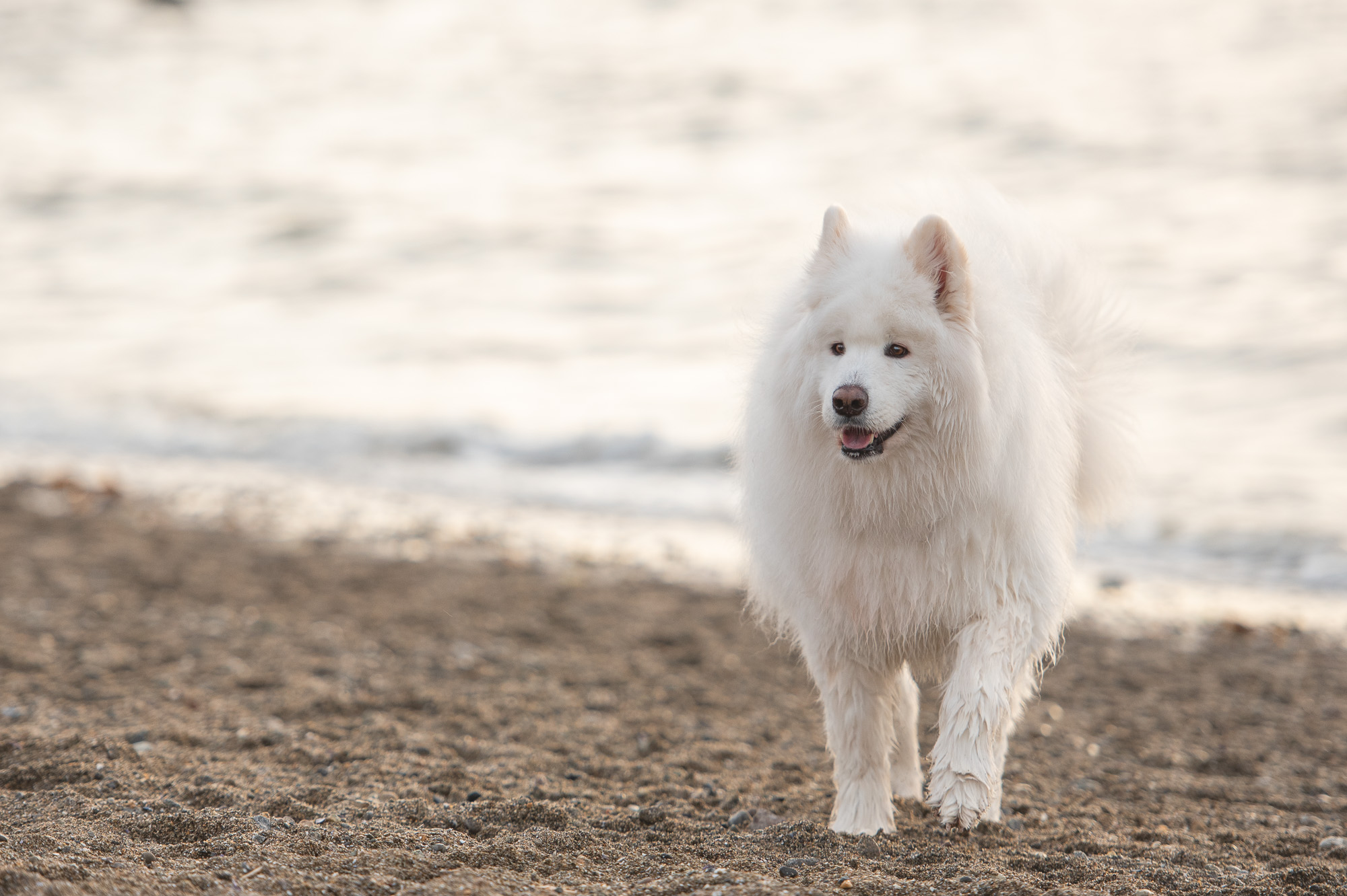 Vancouver dog beach photo.JPG