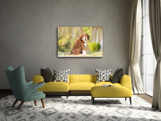 canvas dog photo.JPG