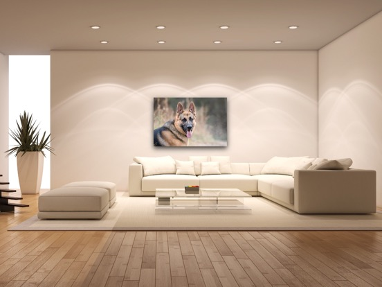 canvas dog photography.JPG