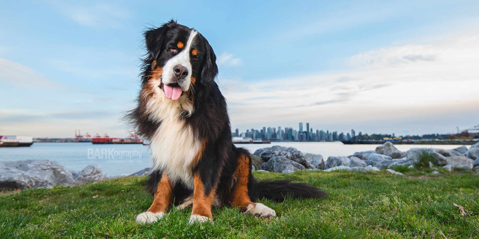 Dog photographer in Vancouver.JPG