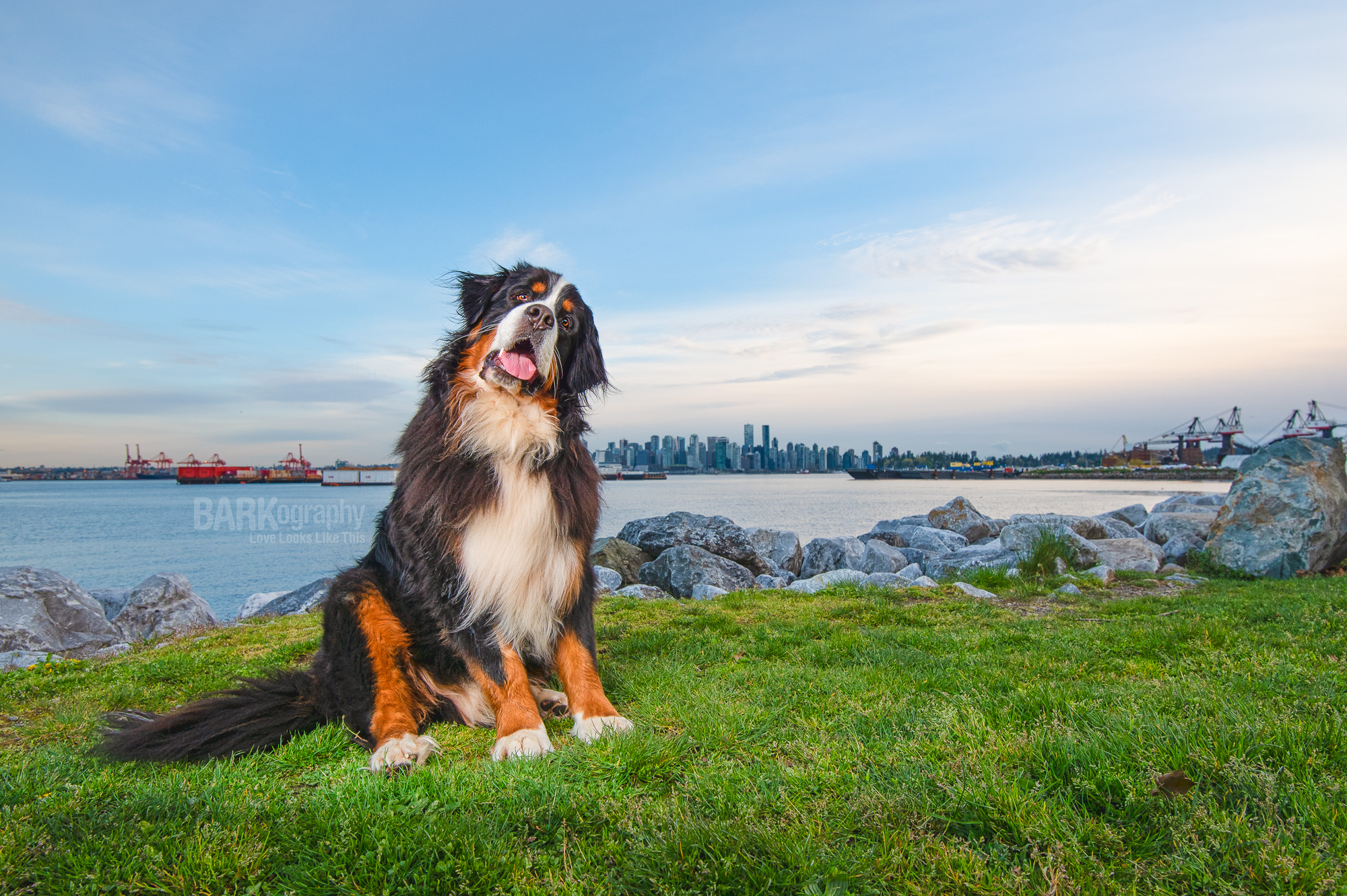 Dog Photographer Travel Sessions.JPG