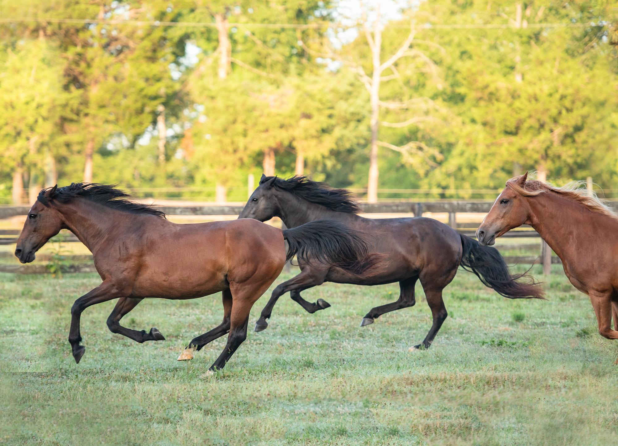 Charlotte horse photographer.JPG