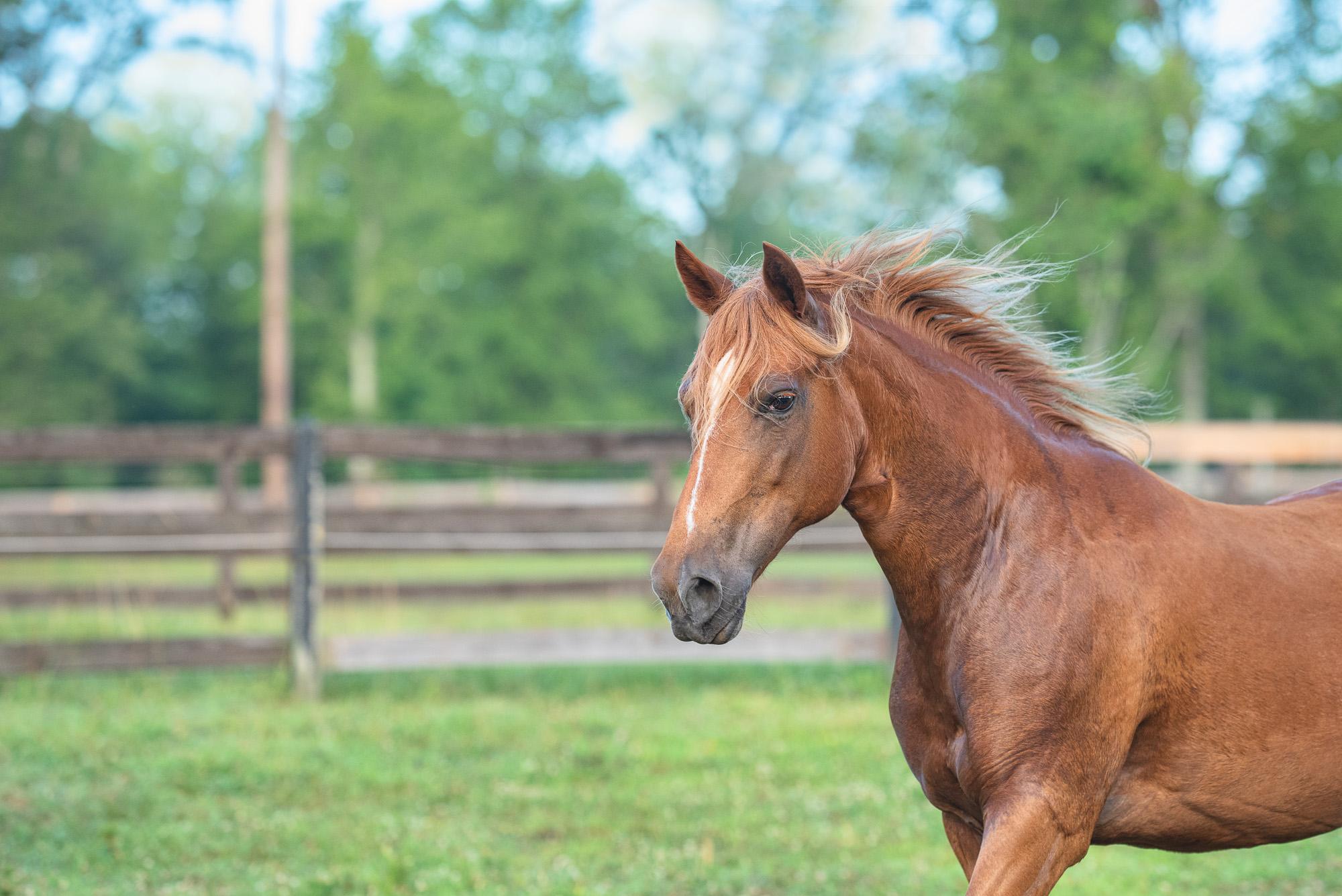 horse photographer Charlotte NC.JPG