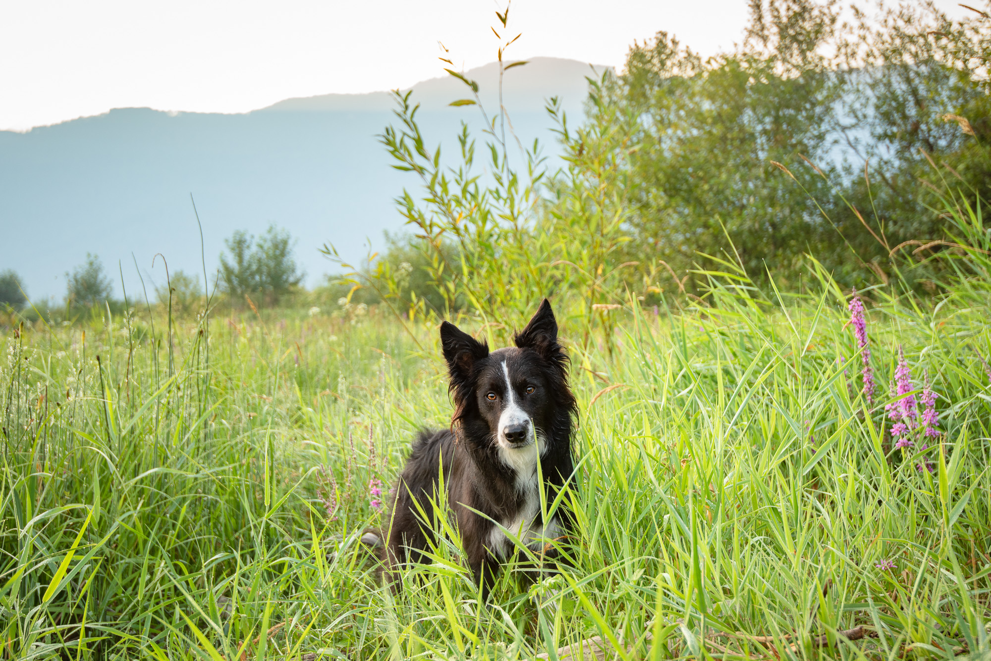 dog photographer British Columbia.JPG