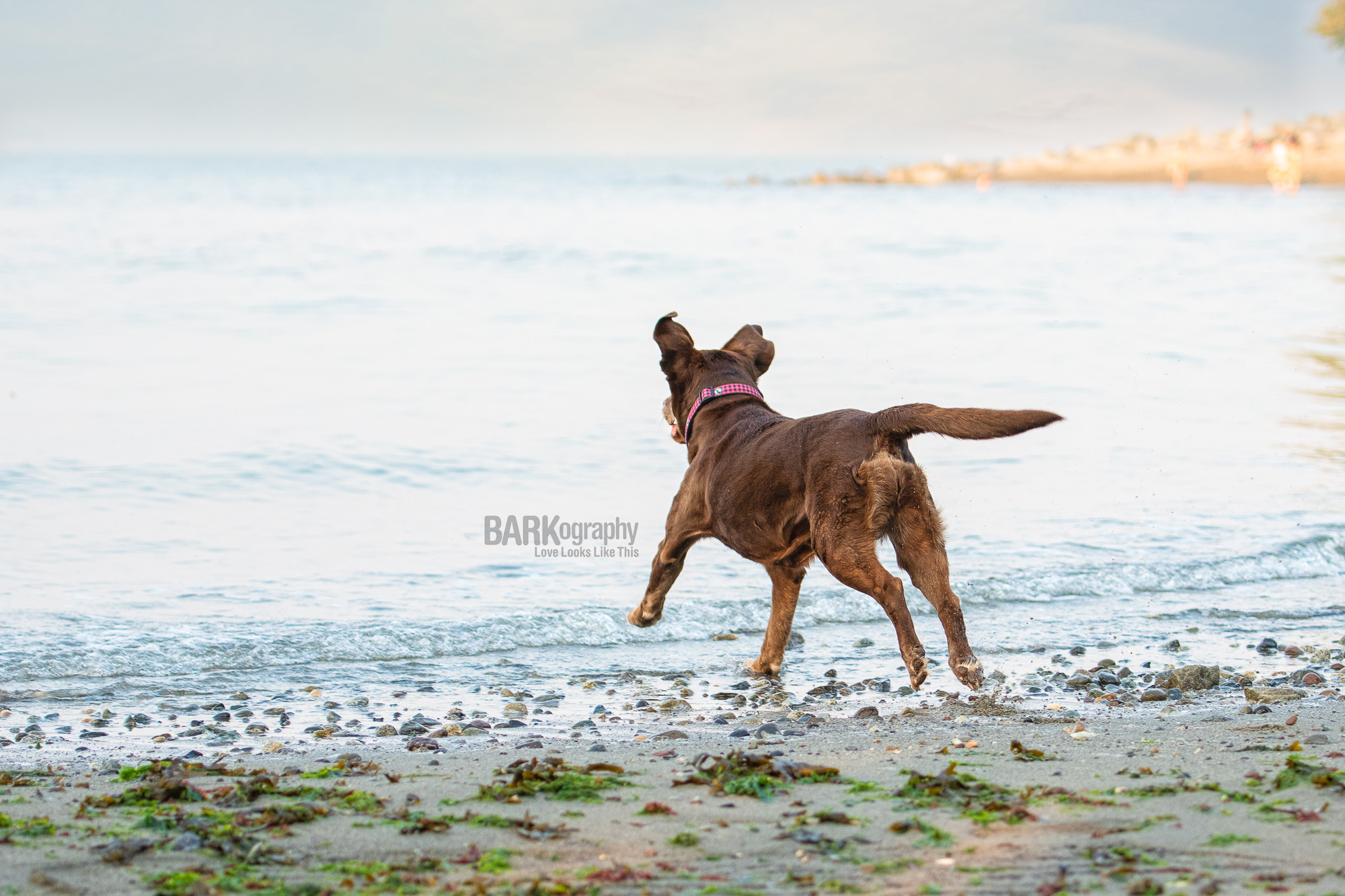 happy dog photography.JPG