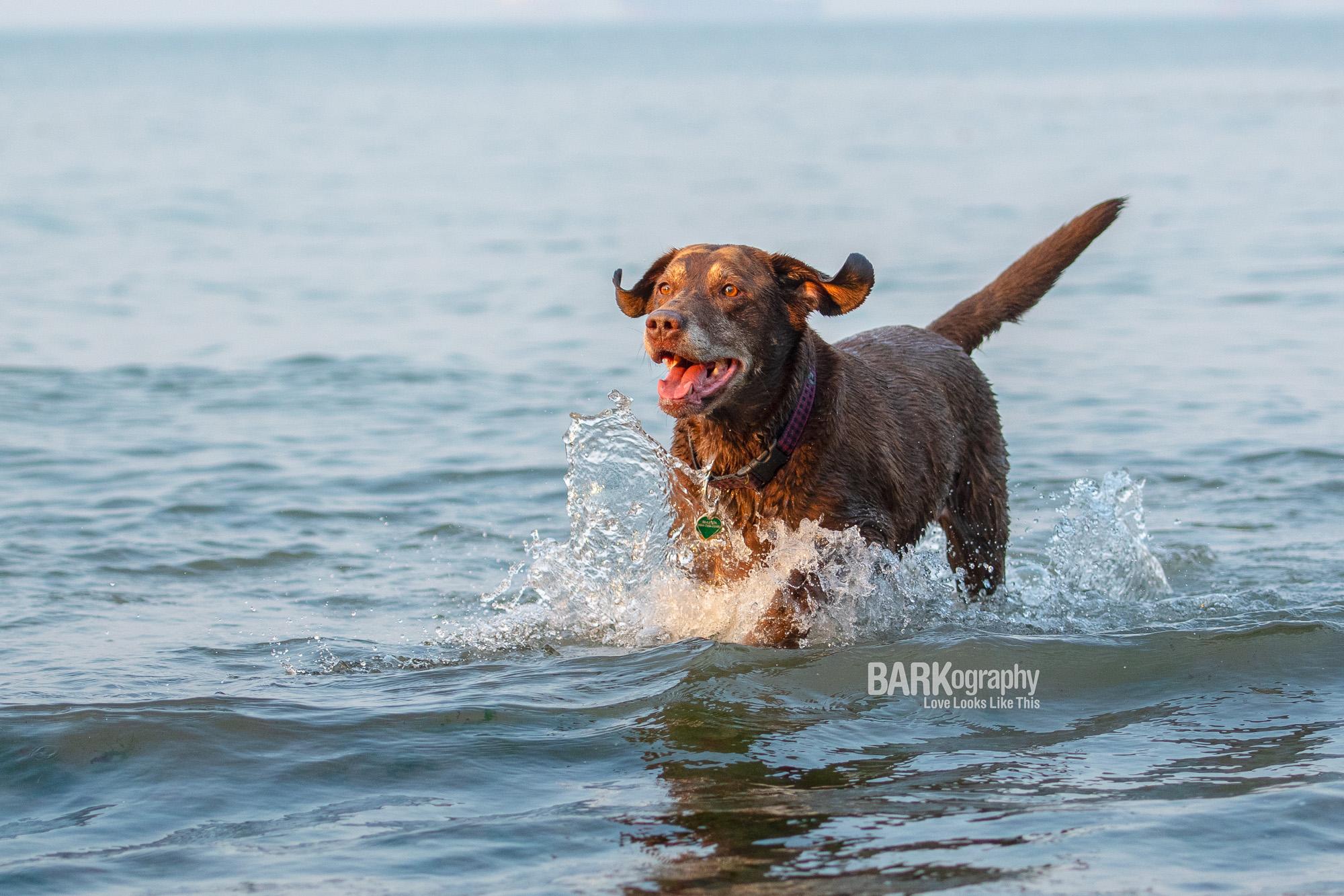 happy dog photographer.JPG