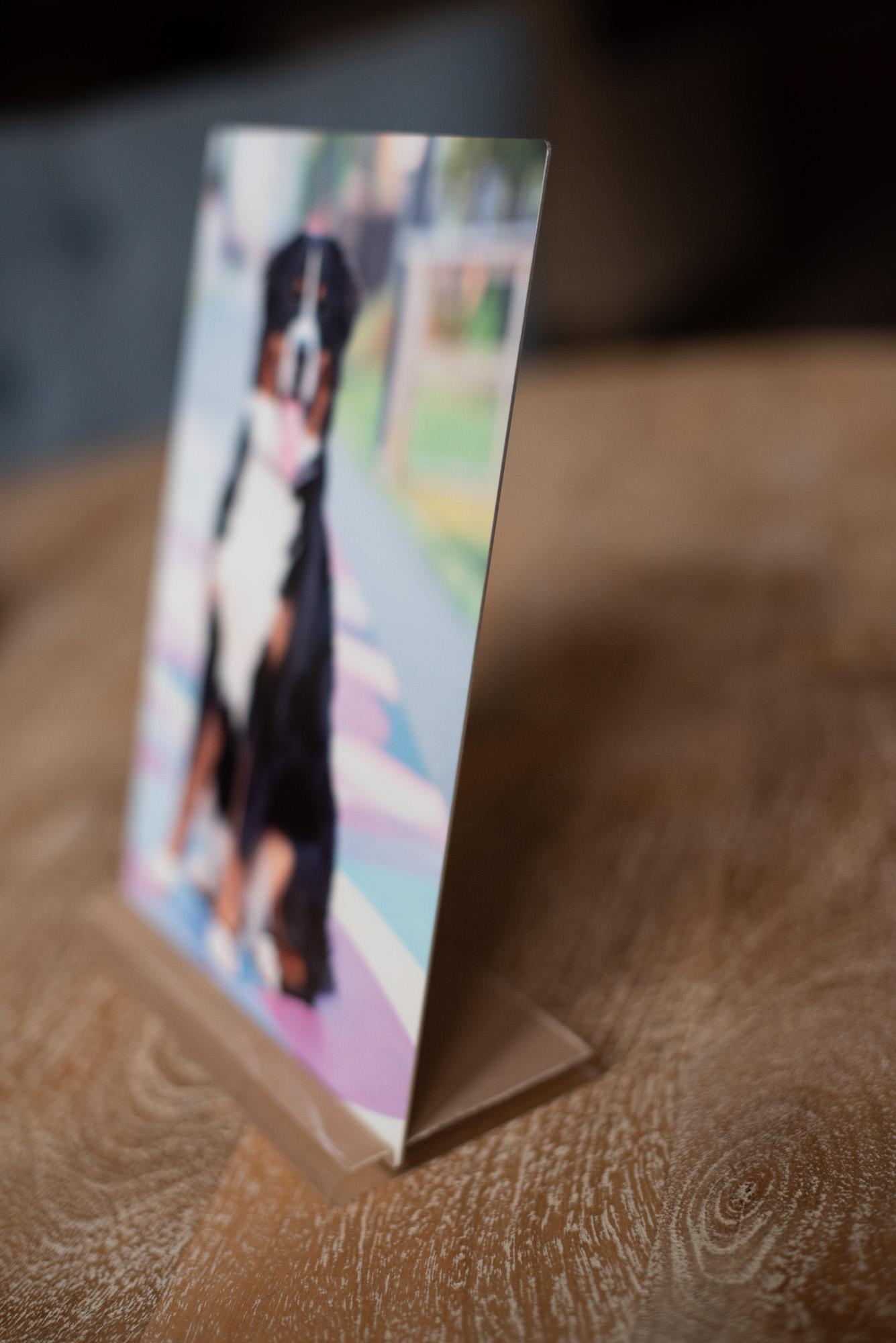 dog photo metal table top art.JPG