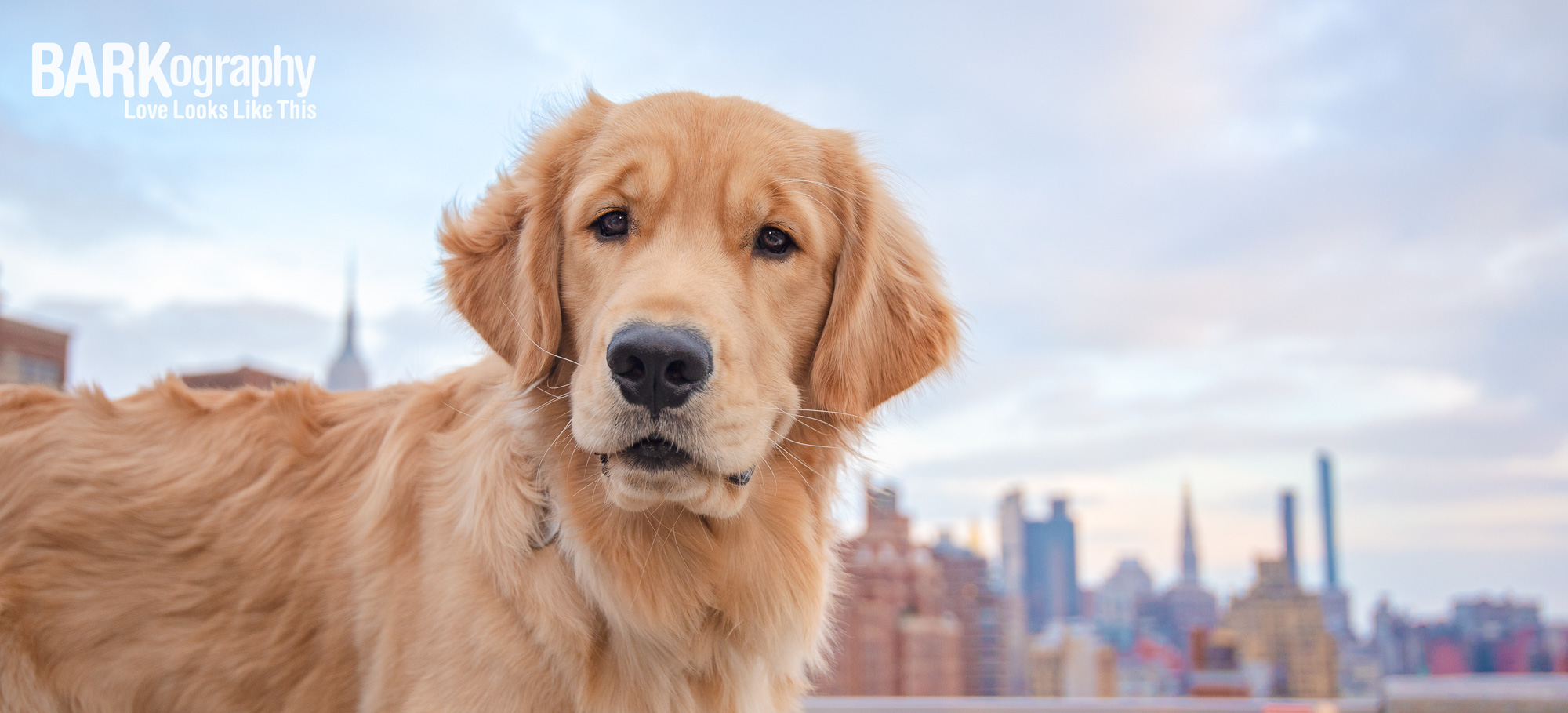 New York City dog photographer