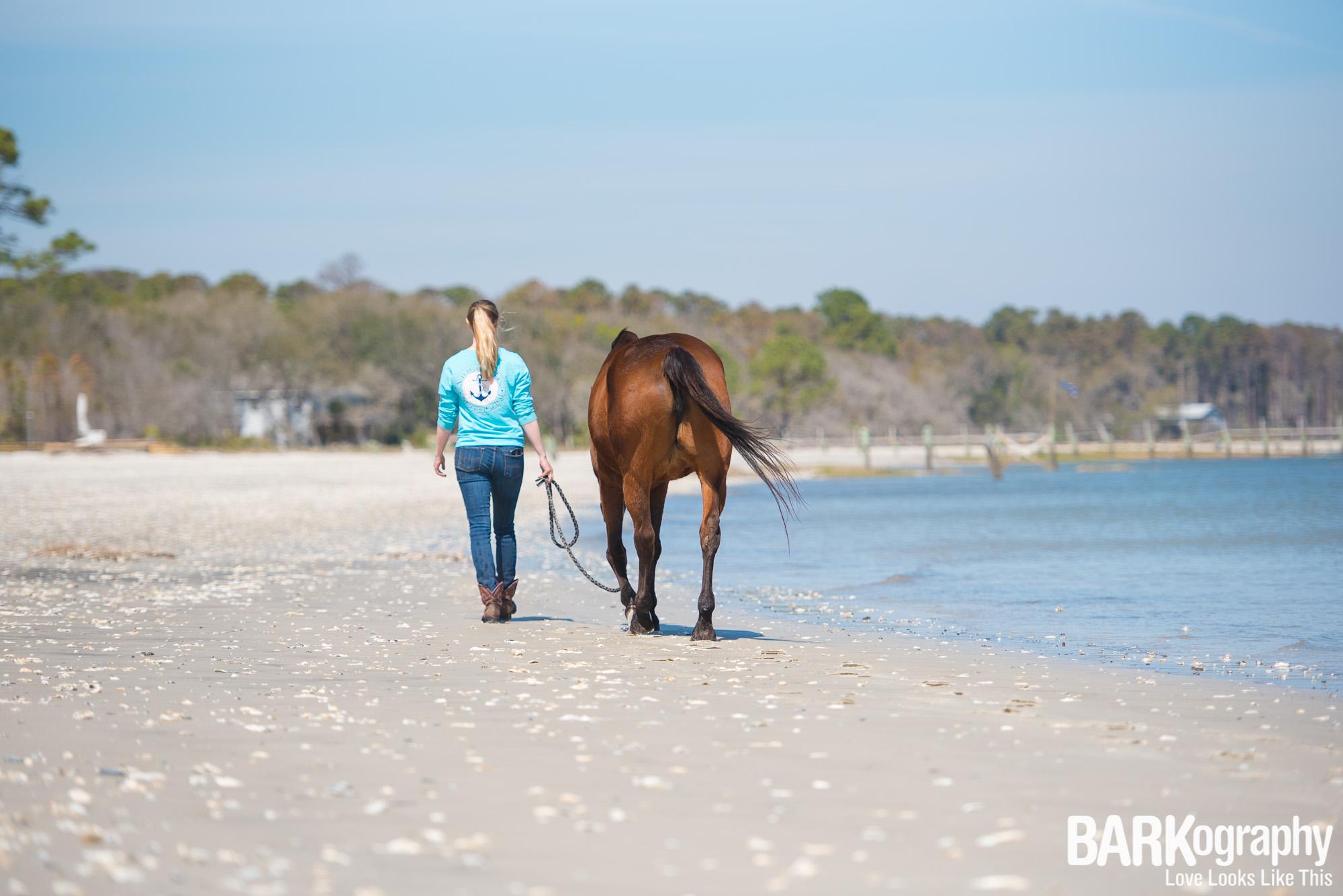 horse photography on the beach.JPG