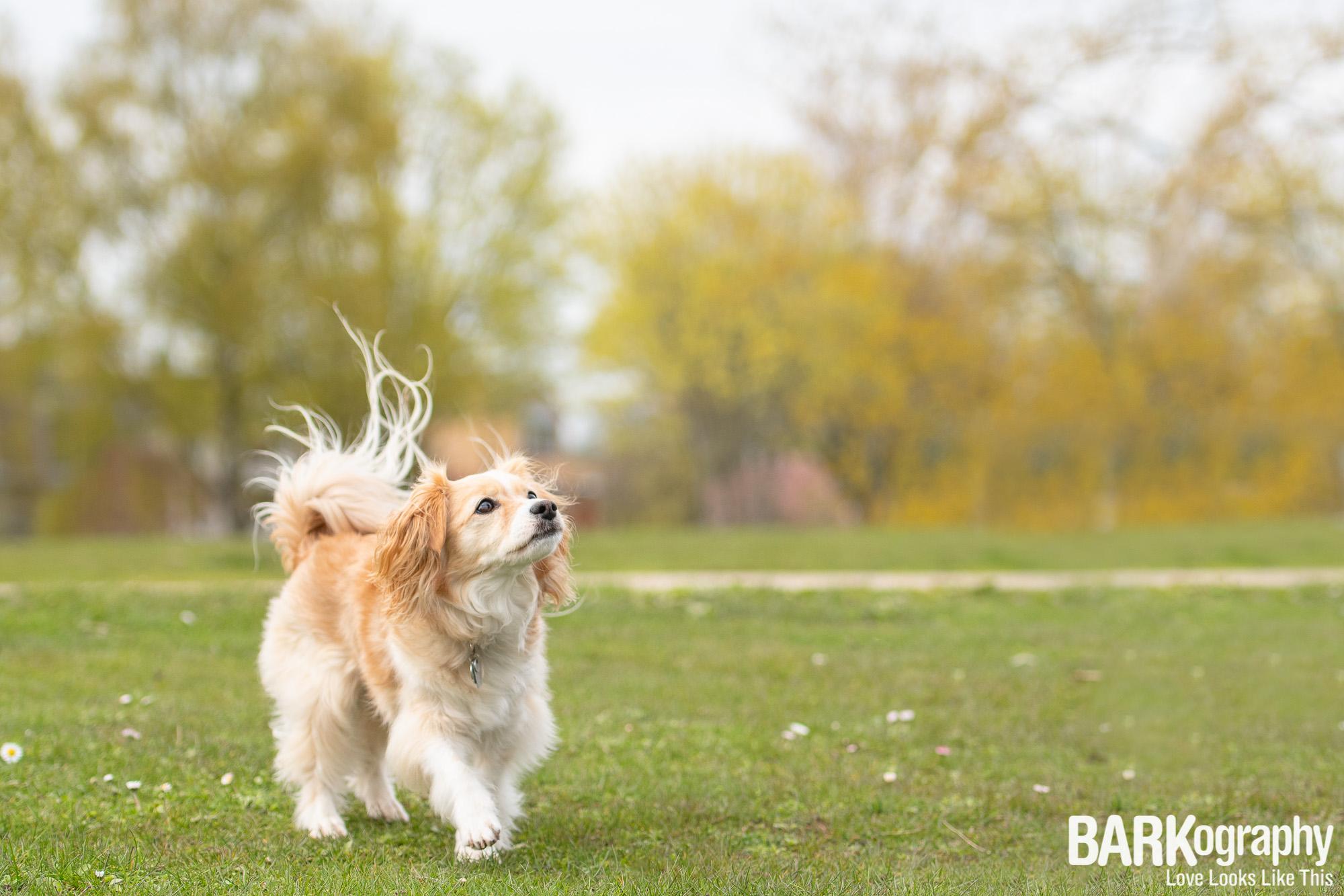 Vancouver Dog Photo.JPG